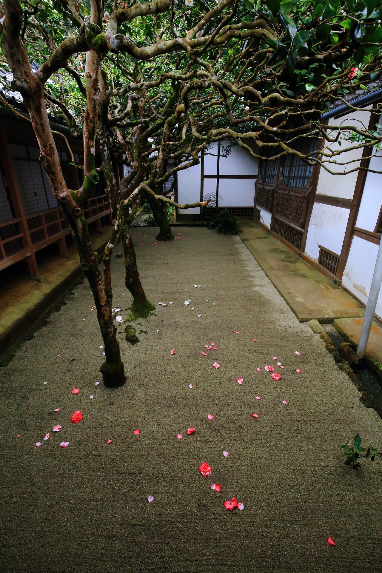 砂に上品かつ鮮やかに椿が散る三銘椿の庭