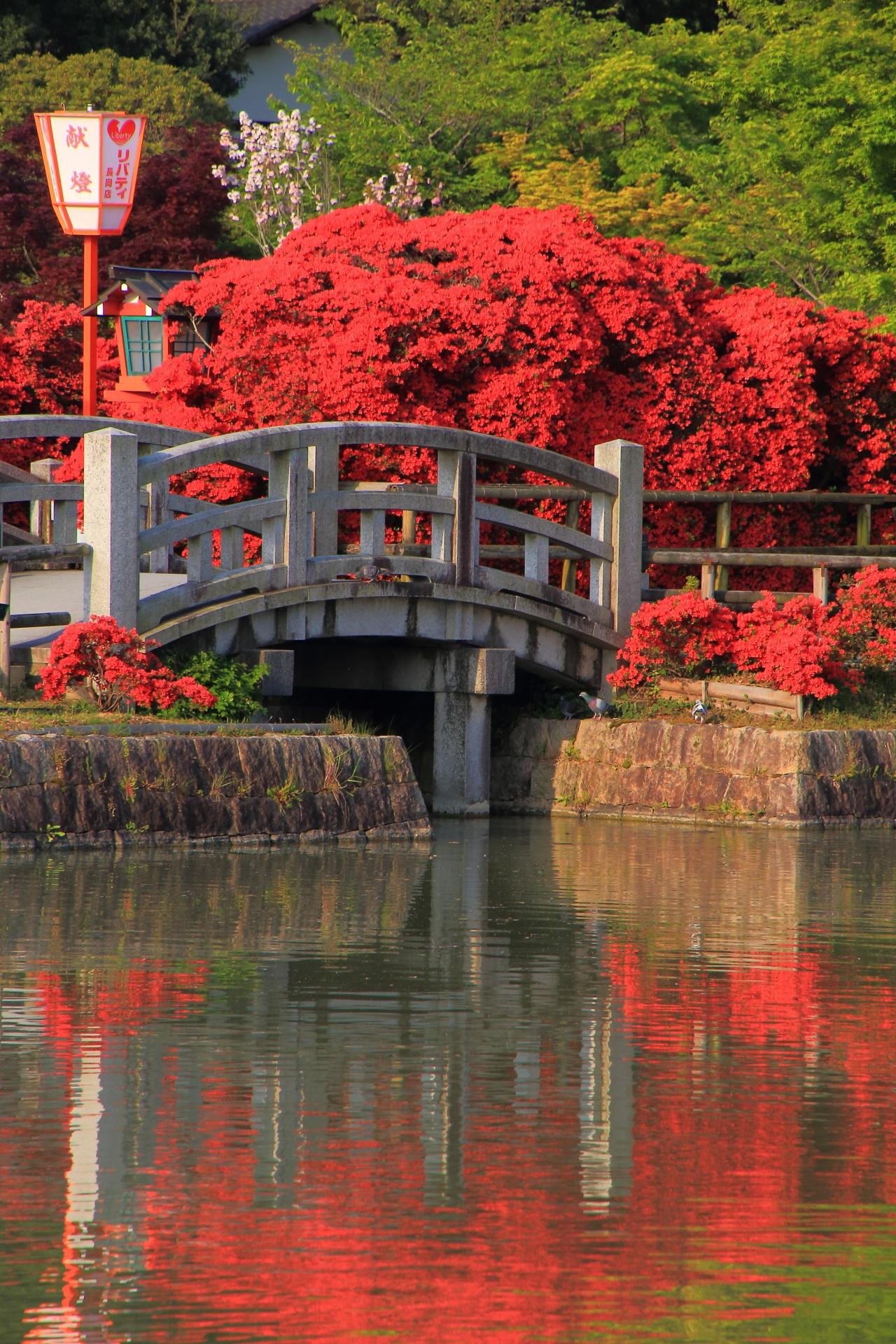 優雅に揺らめく水面を彩るツツジの赤い水鏡