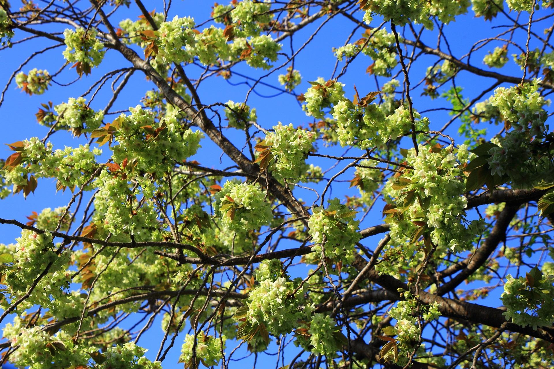 青空に映える緑の花