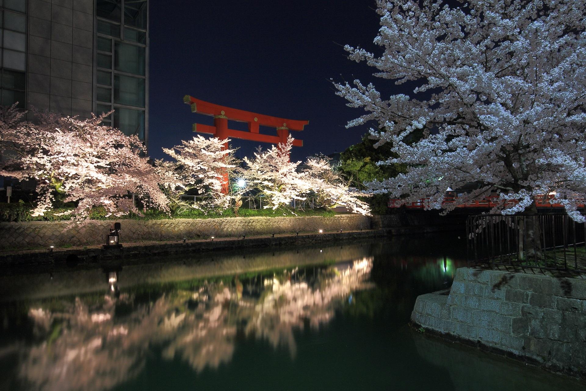 岡崎疏水と平安神宮大鳥居の絵になる夜桜