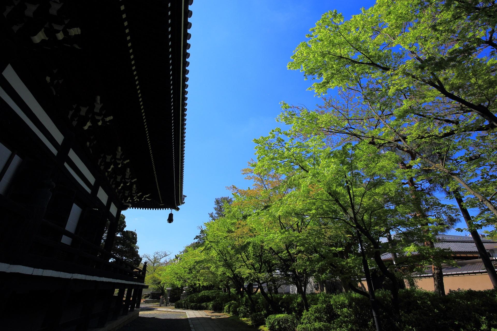 妙顕寺 新緑 写真 高画質
