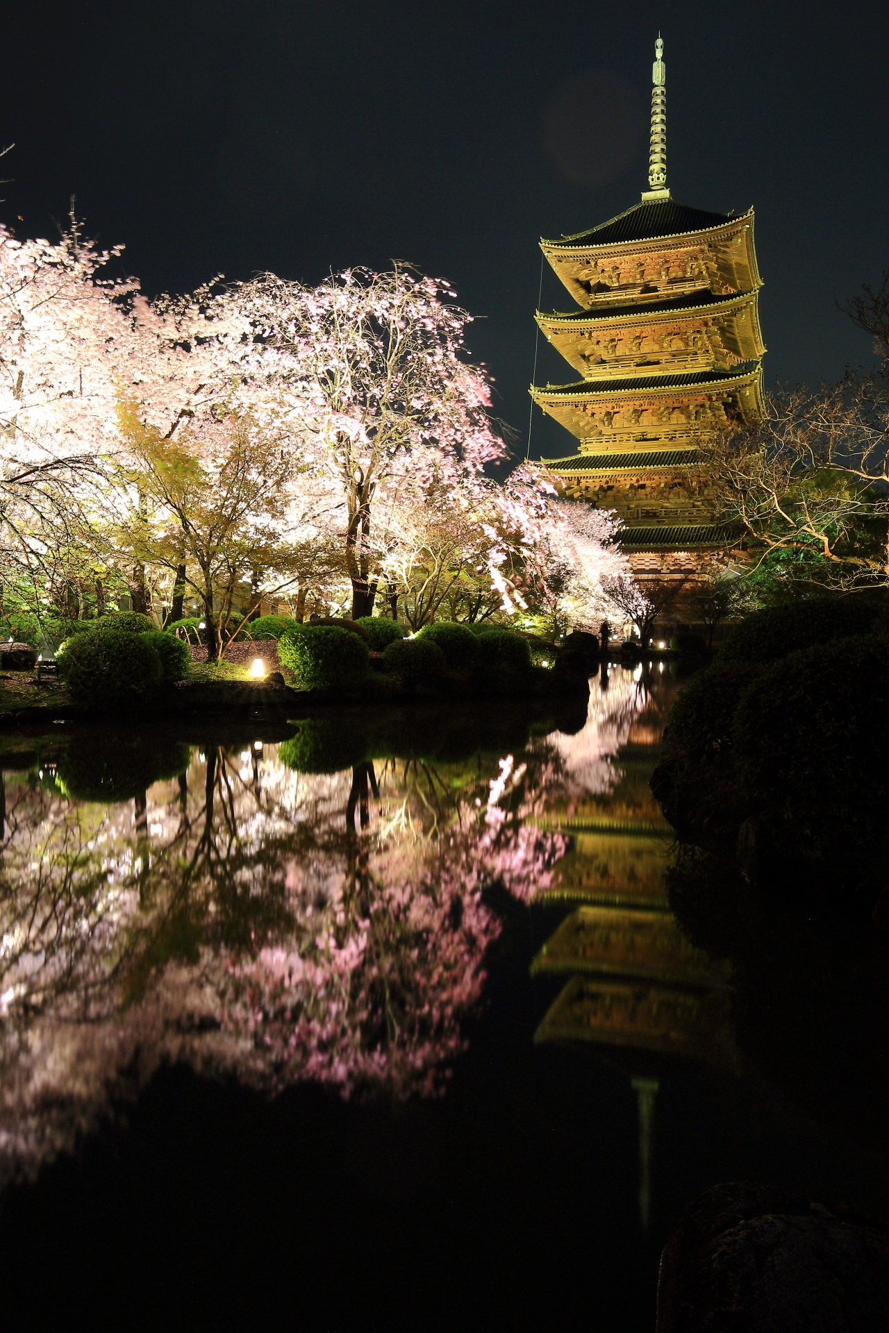 Kyoto To-ji Temple cherryblossoms lightup