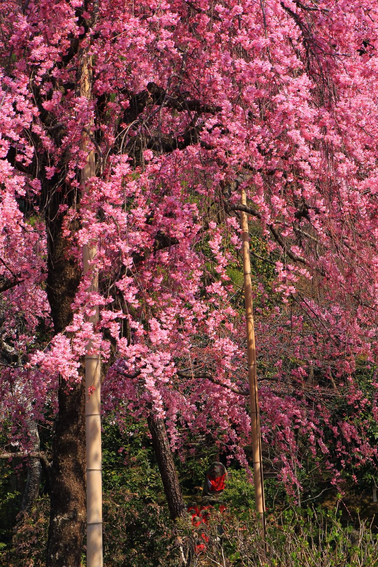石仏を鮮やかに彩るしだれ桜