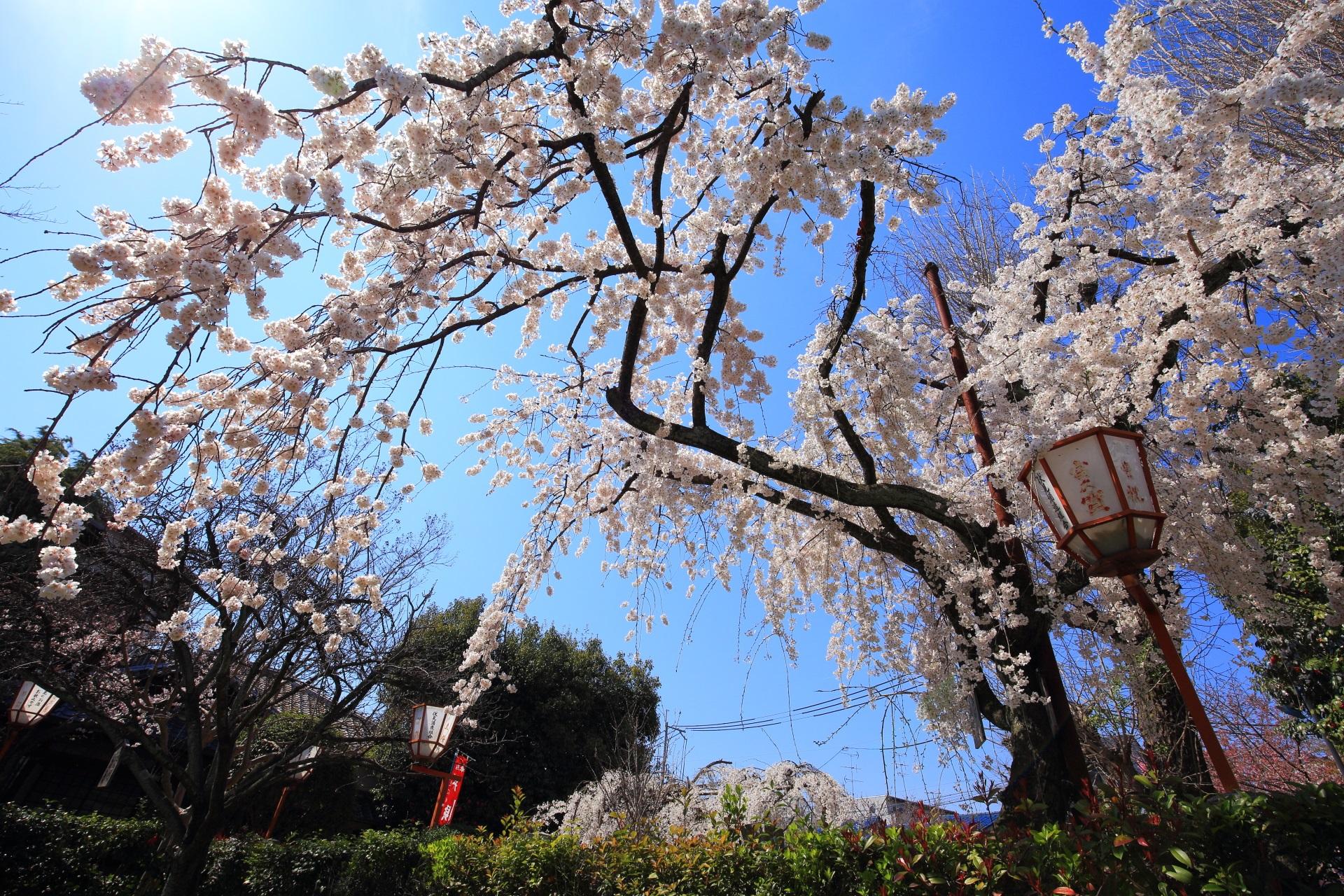 長建寺の素晴らしい桜と春の情景