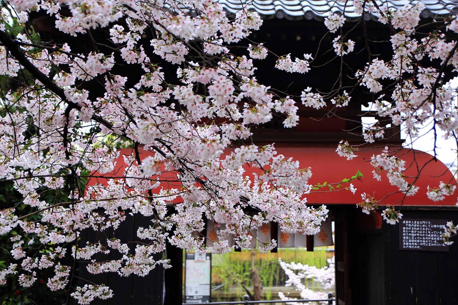 境内から眺めた龍宮門と桜