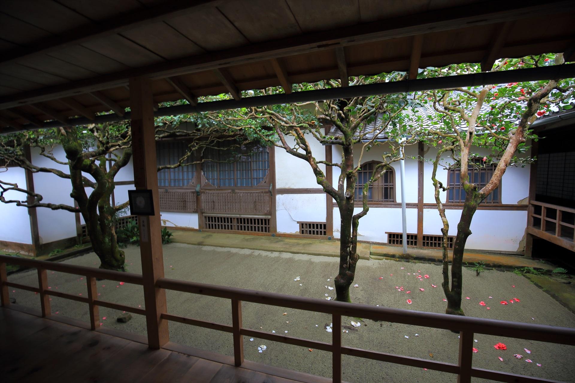 法然院の椿の庭