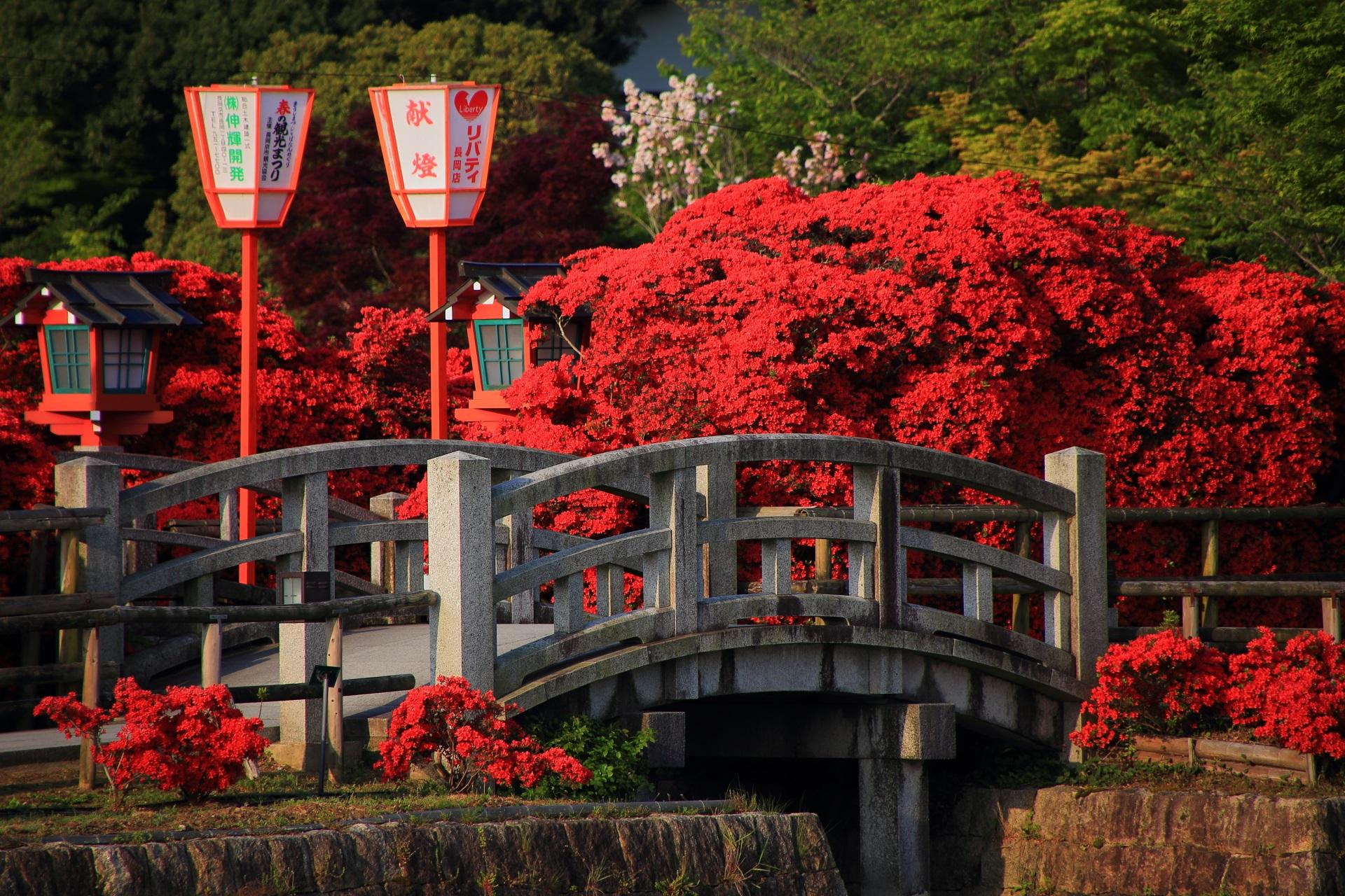 風情ある石の橋に良く合う赤いキリシマツツジ