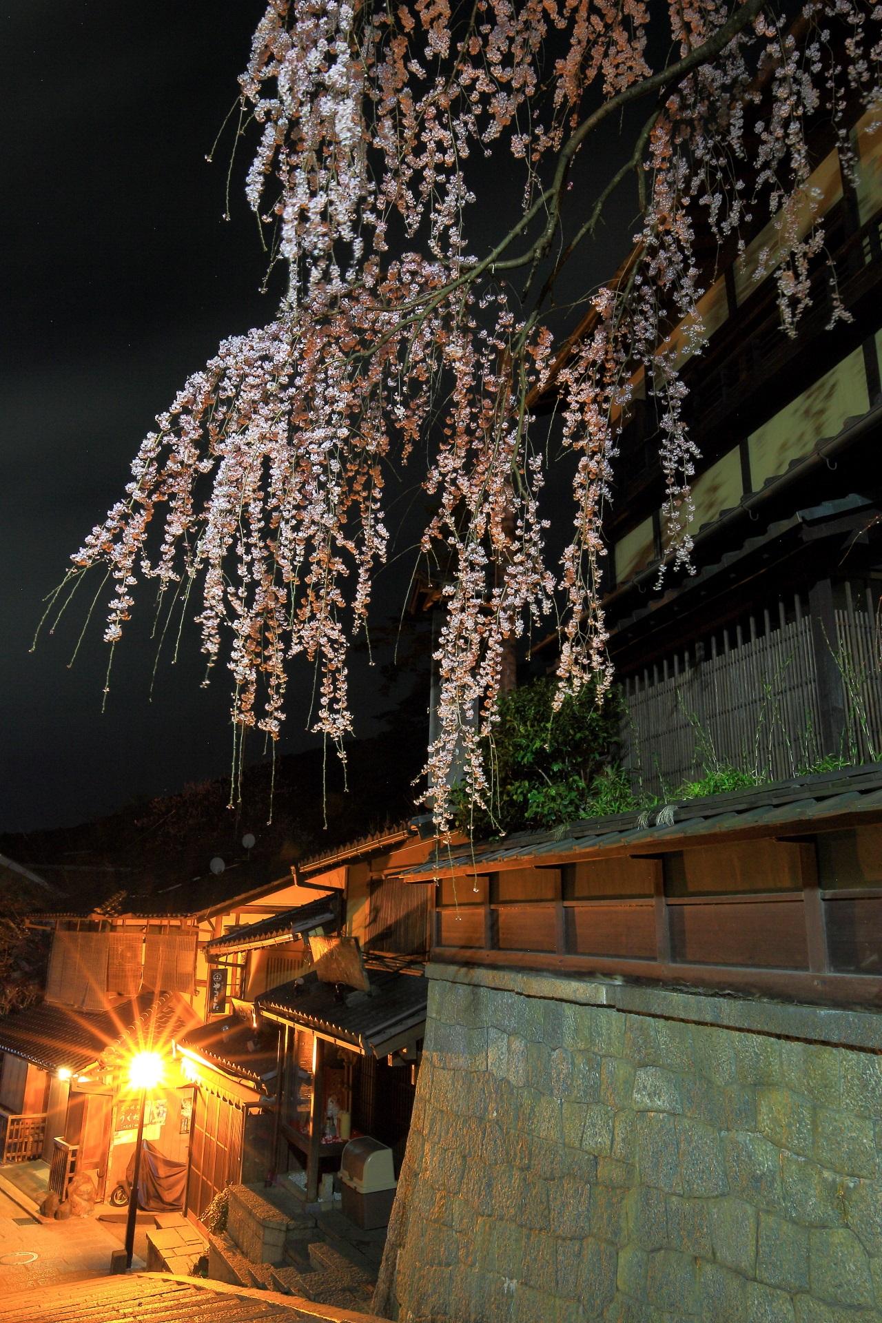 闇夜を彩る幻想的で妖艶なしだれ桜
