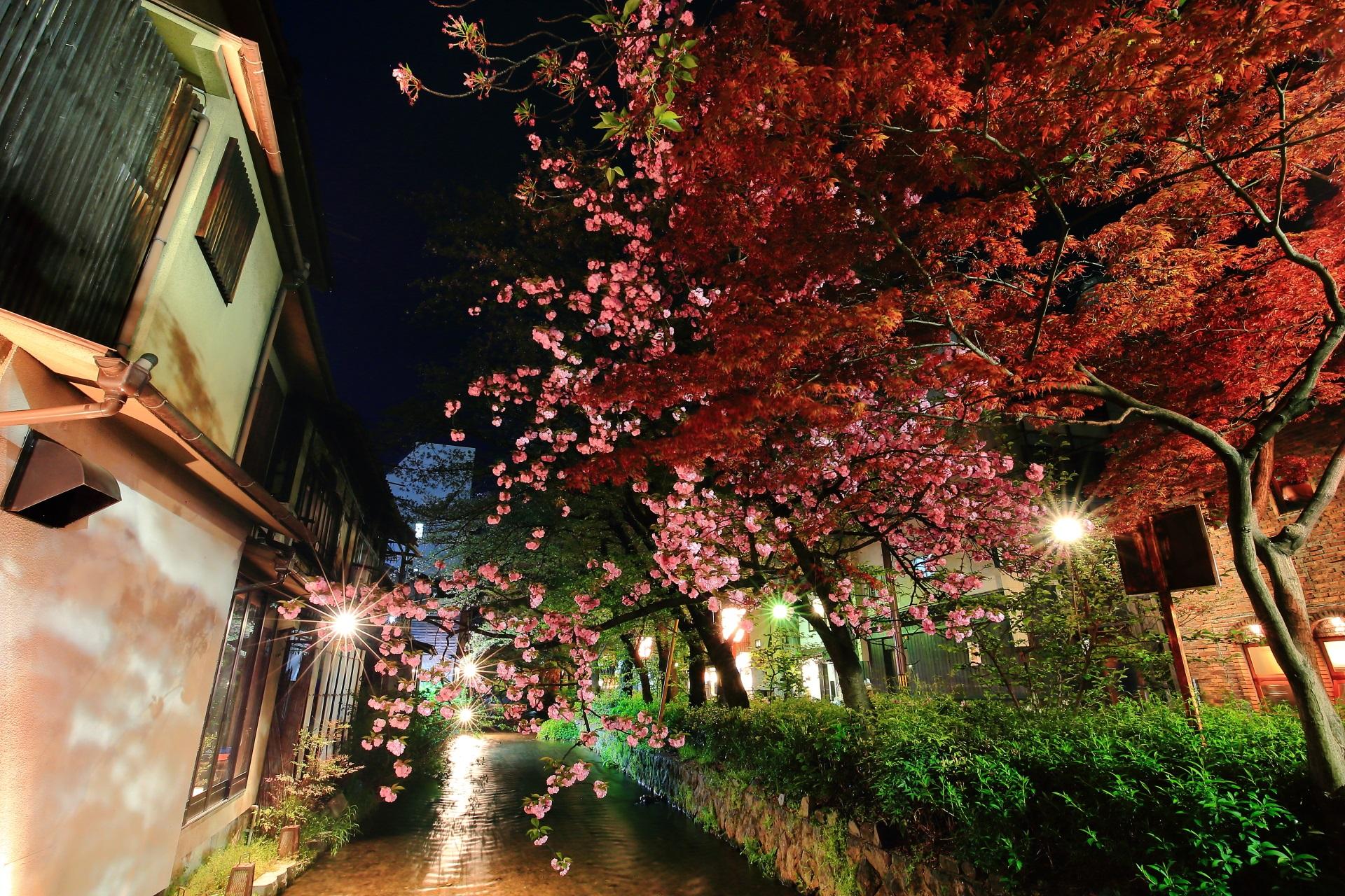 廻りの建物や街並みも雰囲気がある八重桜と紅葉