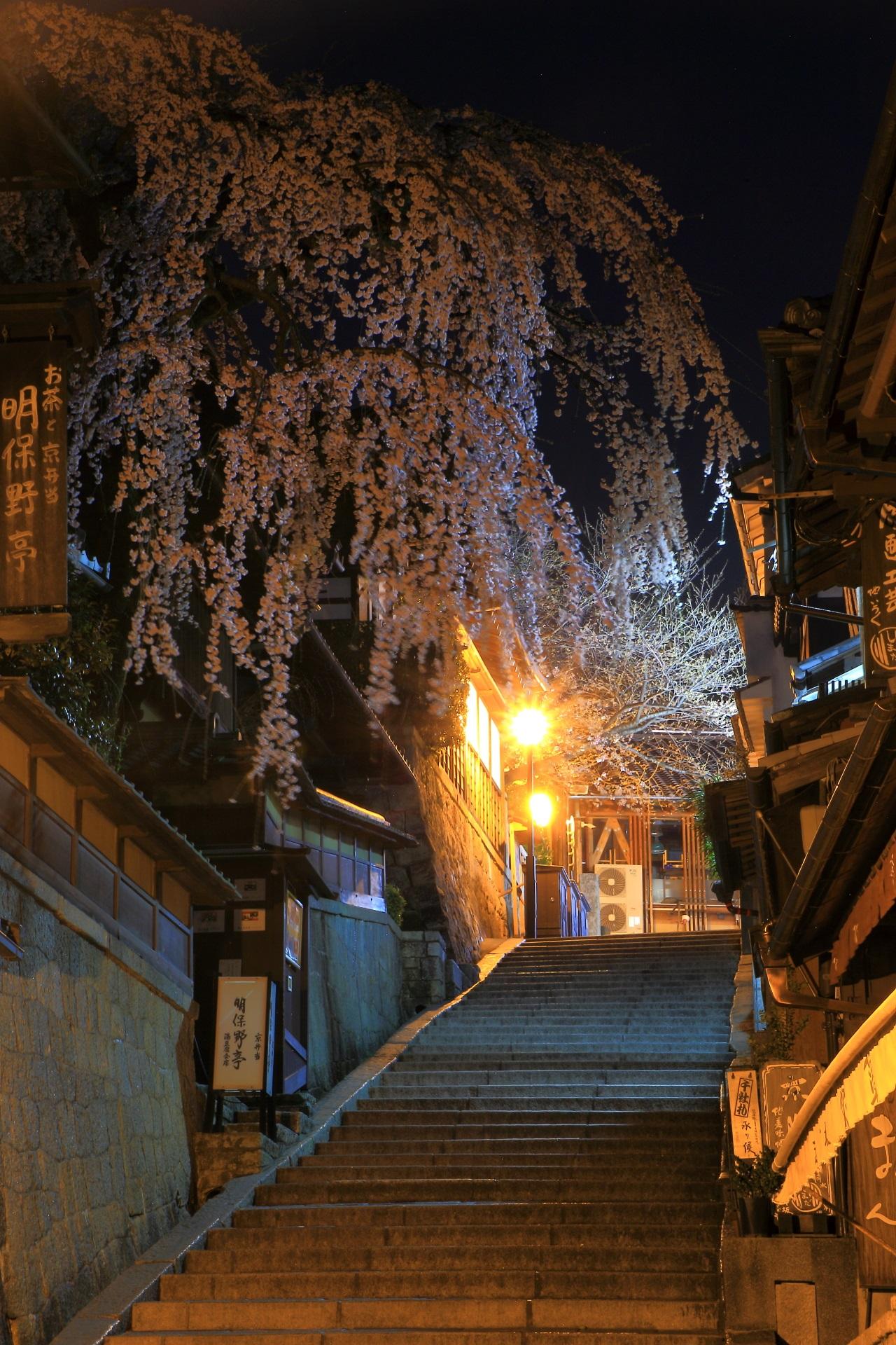 下から見上げた産寧坂と風に揺らぐ満開のしだれ桜