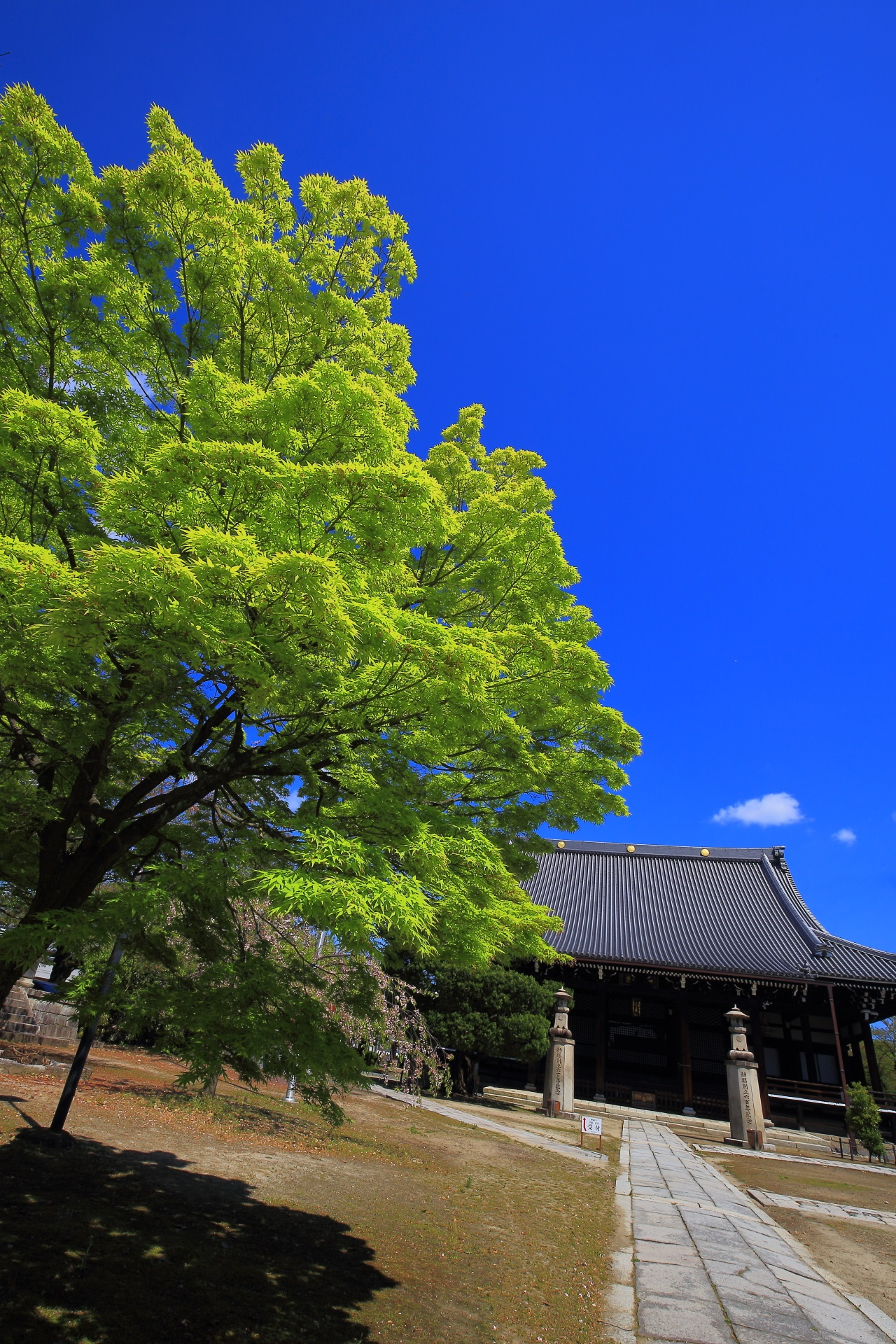 Kyoto Myokenji-Temple blue maple and blue sky