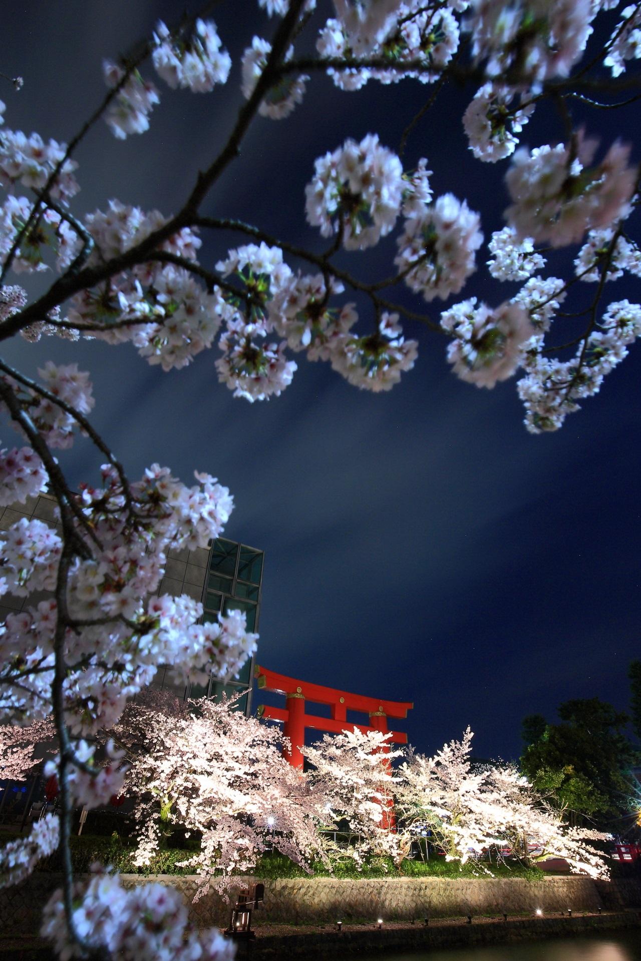高画質 写真 夜桜 岡崎疏水