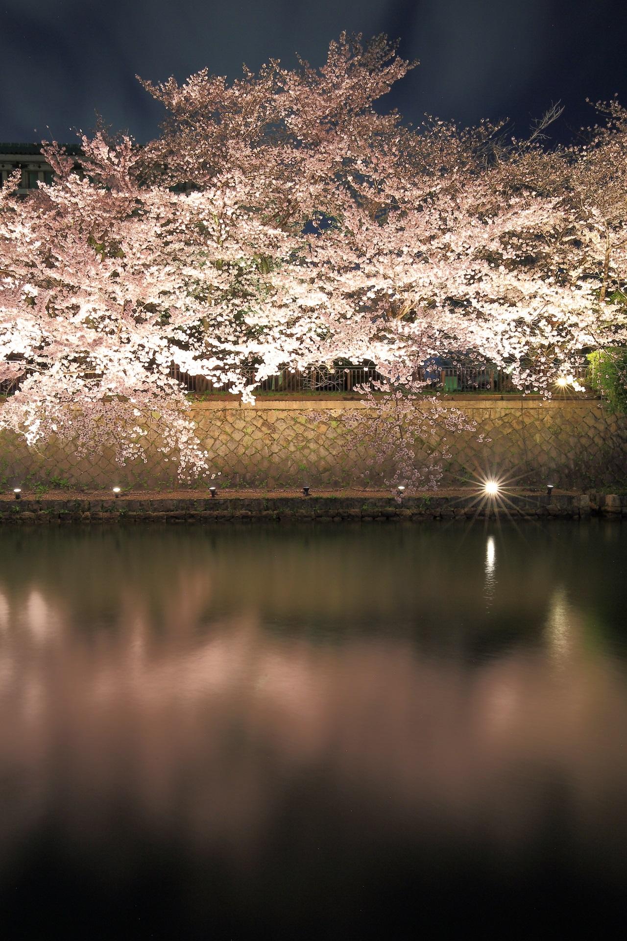 Kyoto Okazaki-sosui cherryblossoms lightup