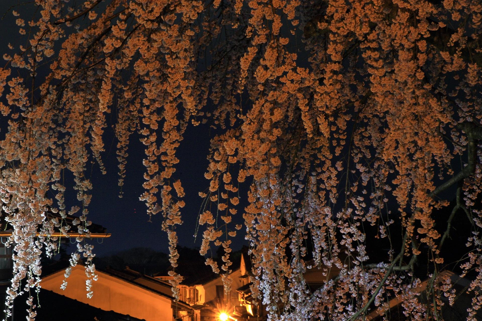高画質 写真 産寧坂 夜桜
