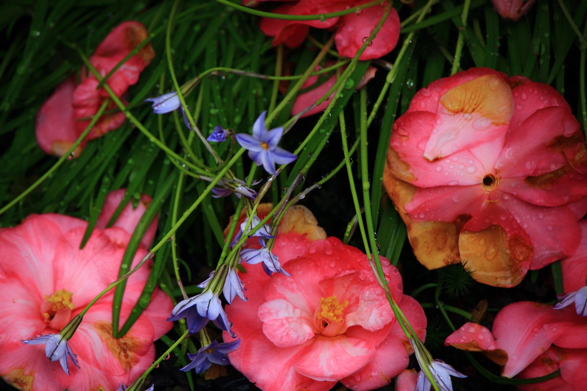 草花と散り椿のコラボ
