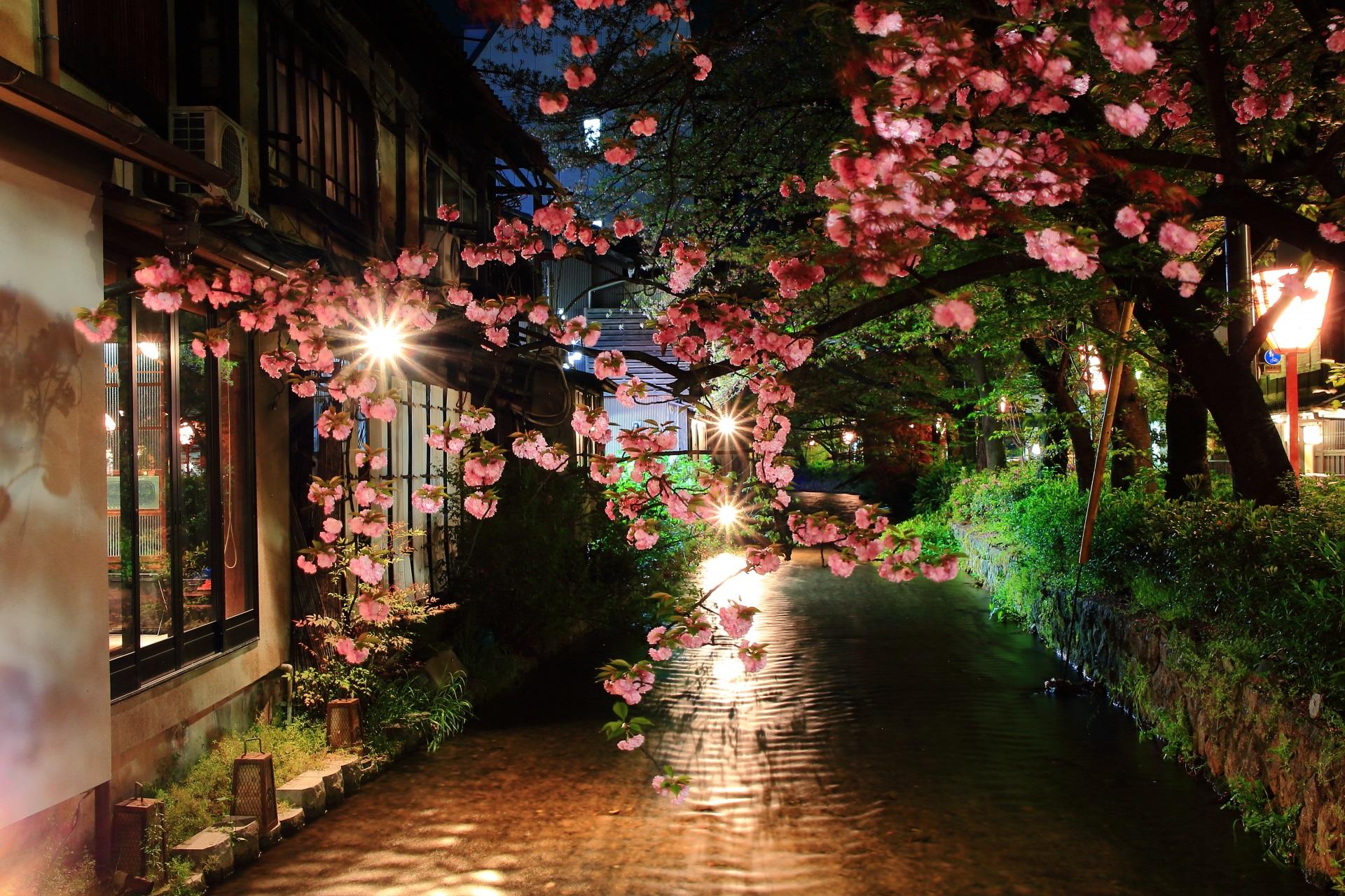 水面も美しい高瀬川の八重桜ライトアップ