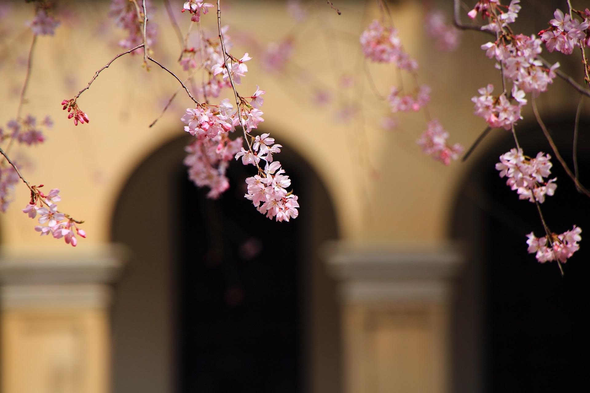 近代建築を背景にした繊細で可愛い花びら