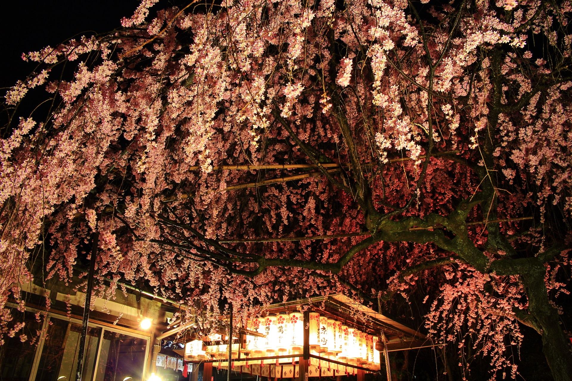 境内を覆うピンクの桜