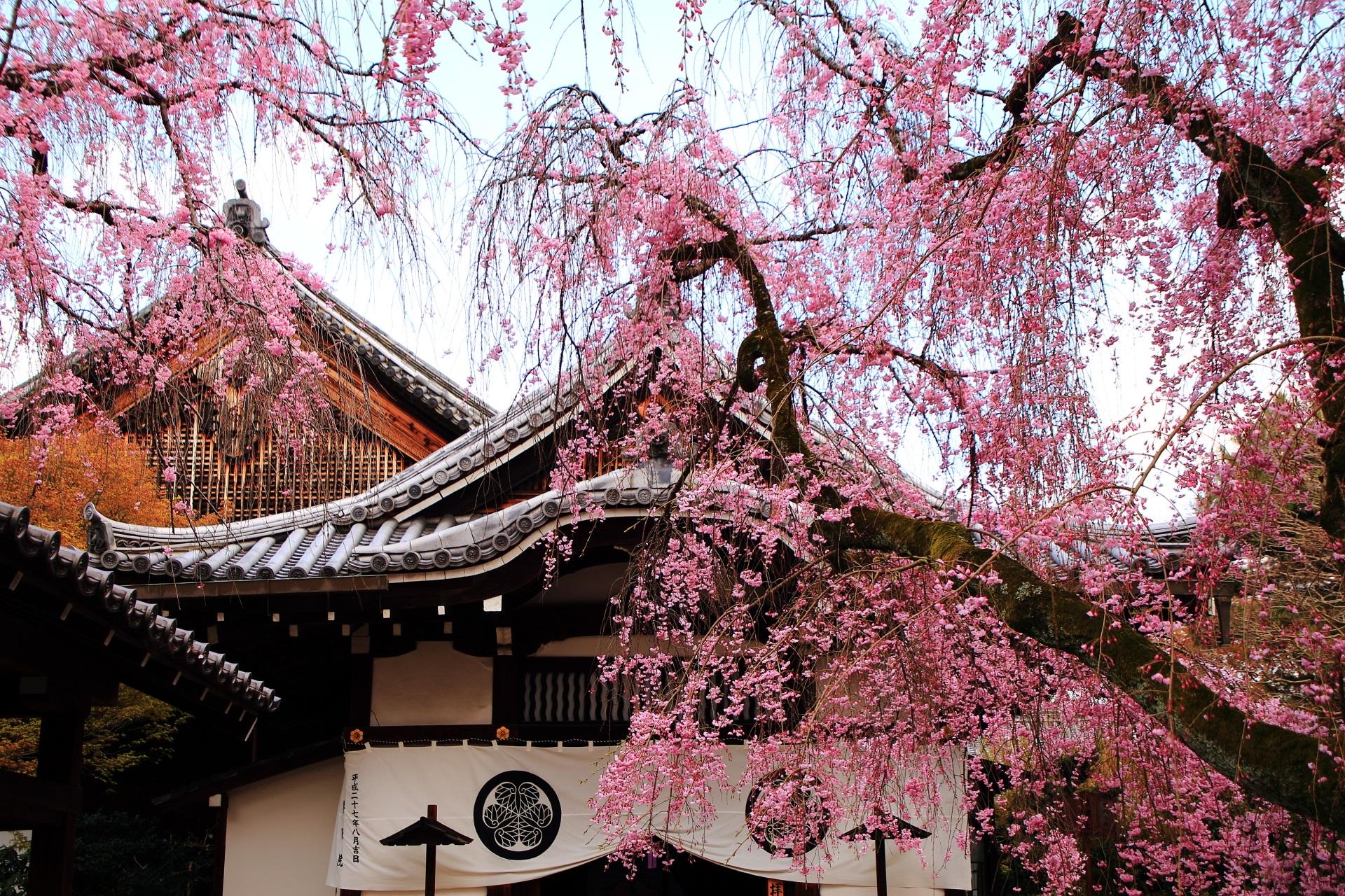 絵になるしだれ桜の風景