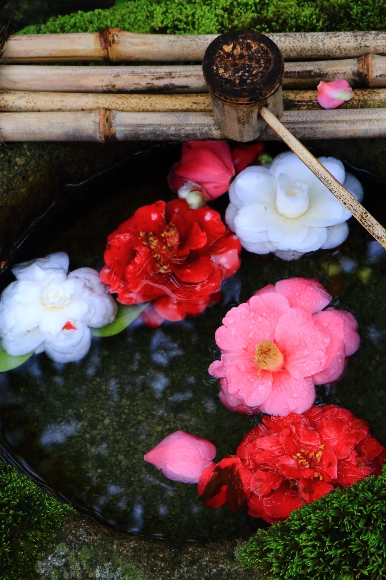 Kyoto Reikan-ji Temple camellia