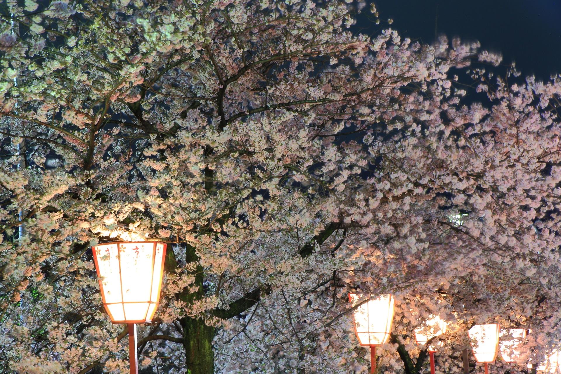 高画質 写真 宮川町 夜桜