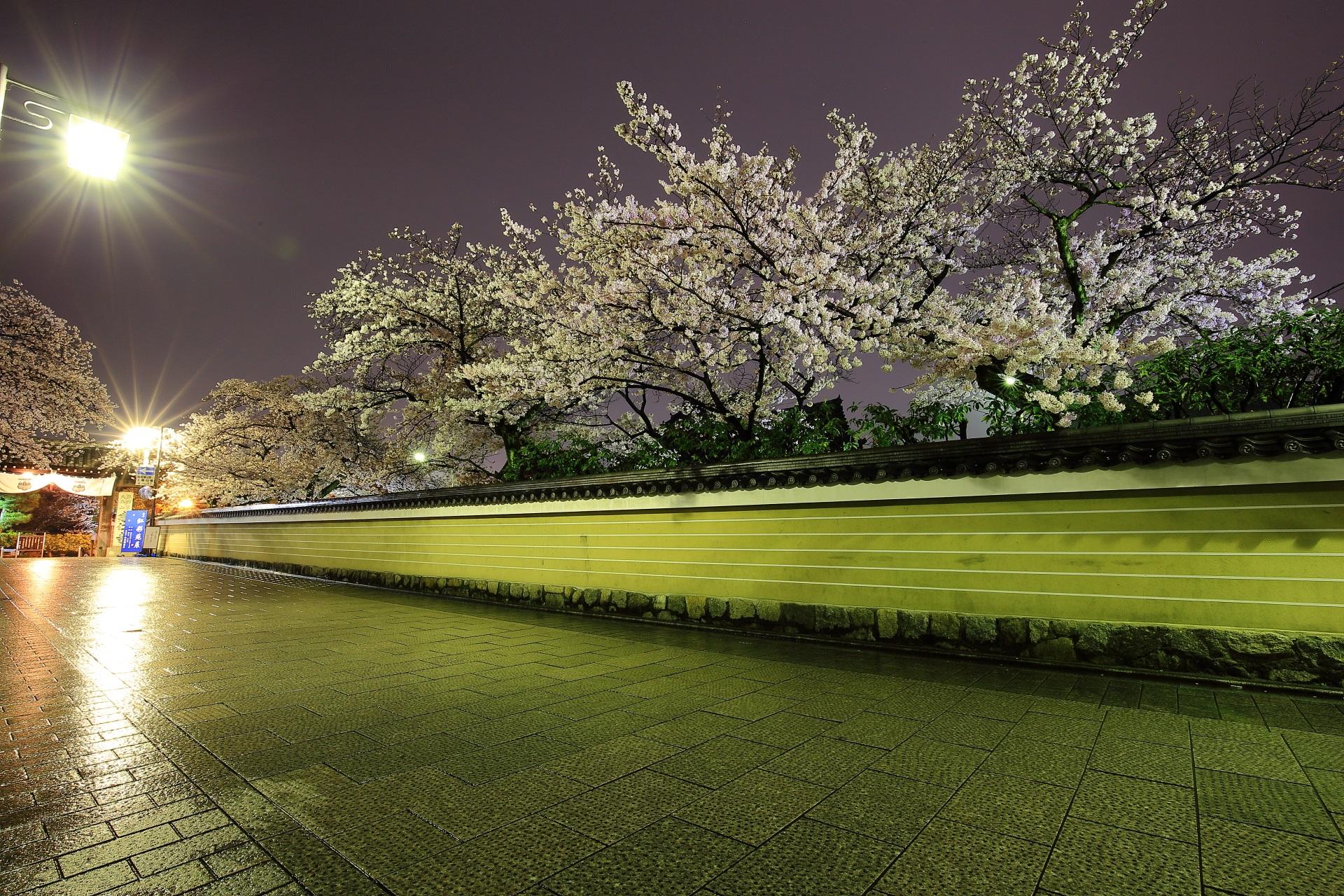 花見小路通から見える建仁寺の闇夜に華やかに咲き誇る夜桜
