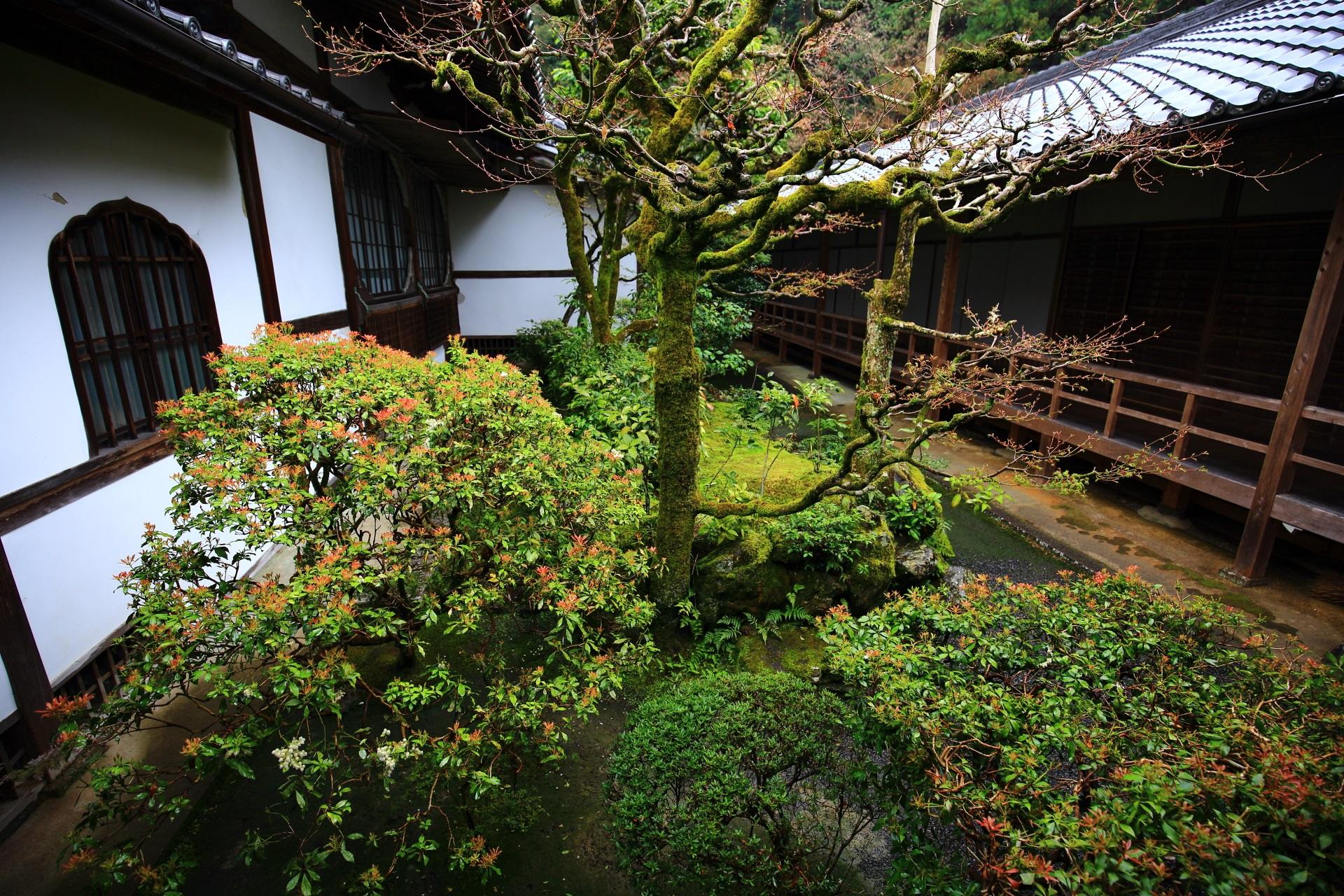 法然院の落ち着いた雰囲気の方丈の中庭