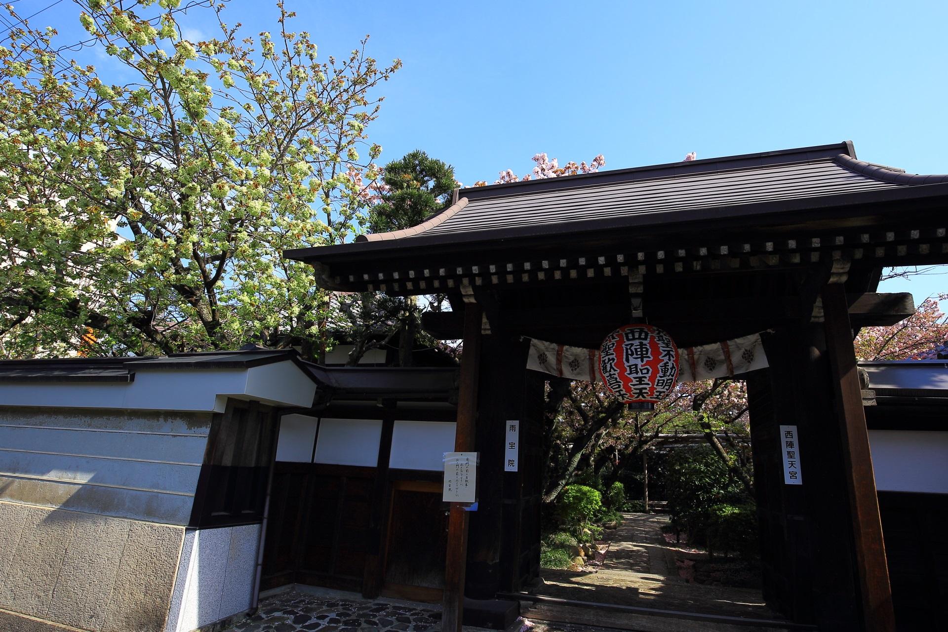 雨宝院の素晴らしい多種多様な桜と春の情景