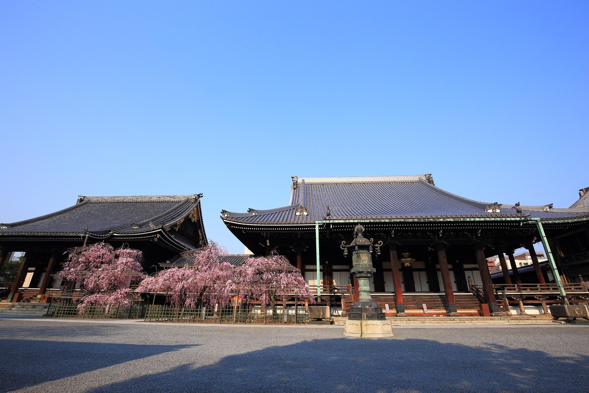 絵になる雄大な一対の伽藍と一対のしだれ桜