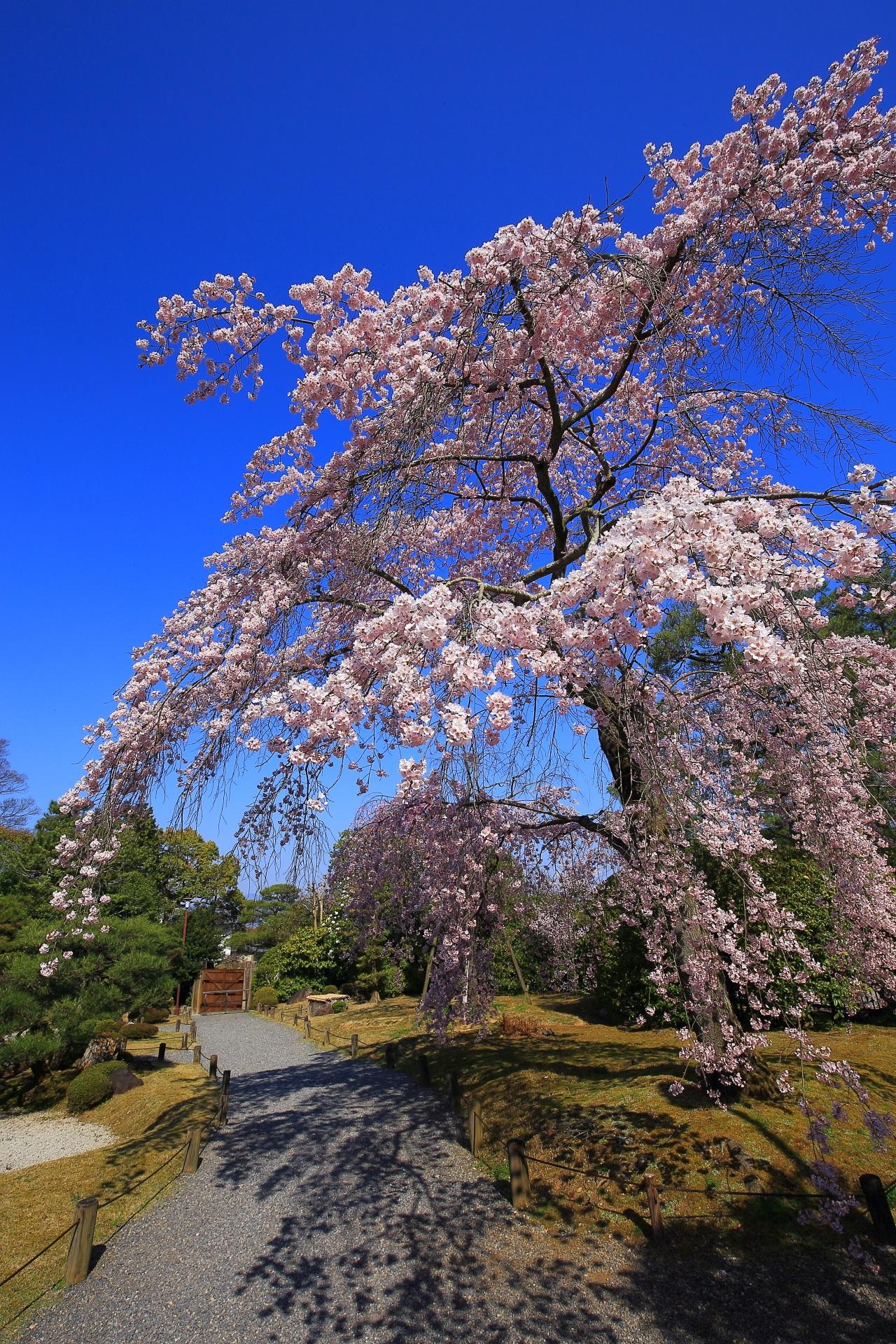 友禅苑の素晴らしすぎるしだれ桜と春の情景