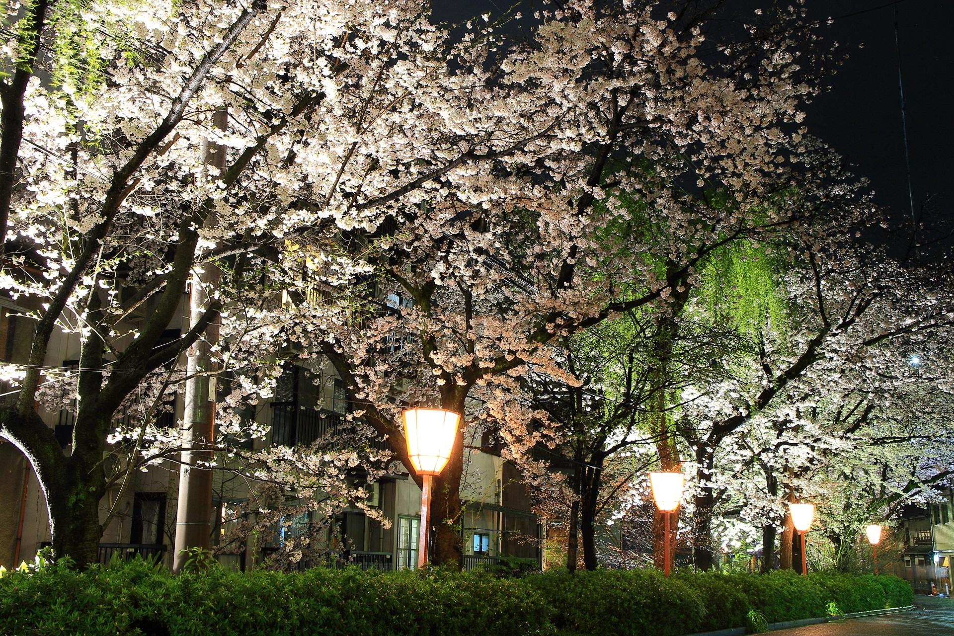無料で楽しめる23時ころまで行われる夜桜ライトアップ