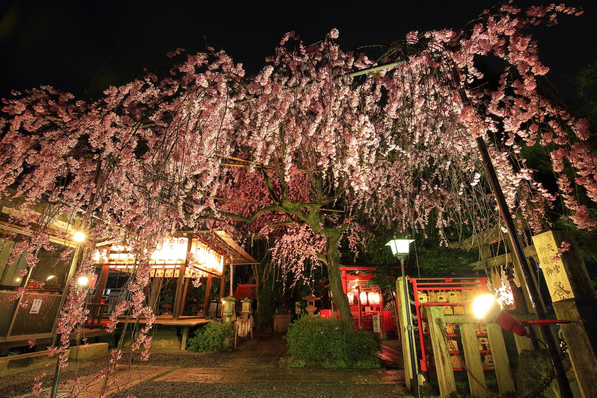 高画質 写真 水火天満宮 夜桜