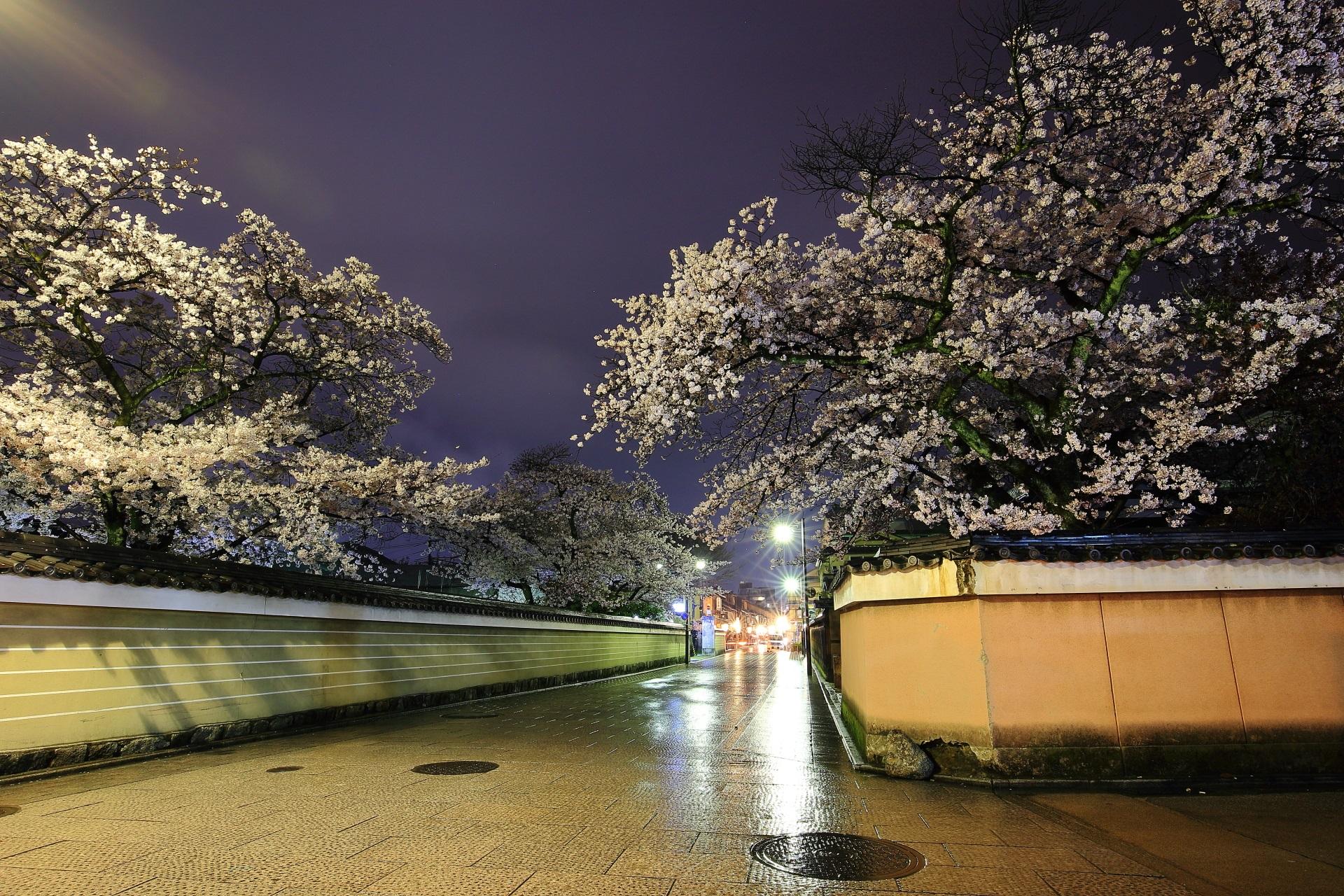 雨に濡れた花見小路通の石畳と大仲院の溢れ出す満開の桜