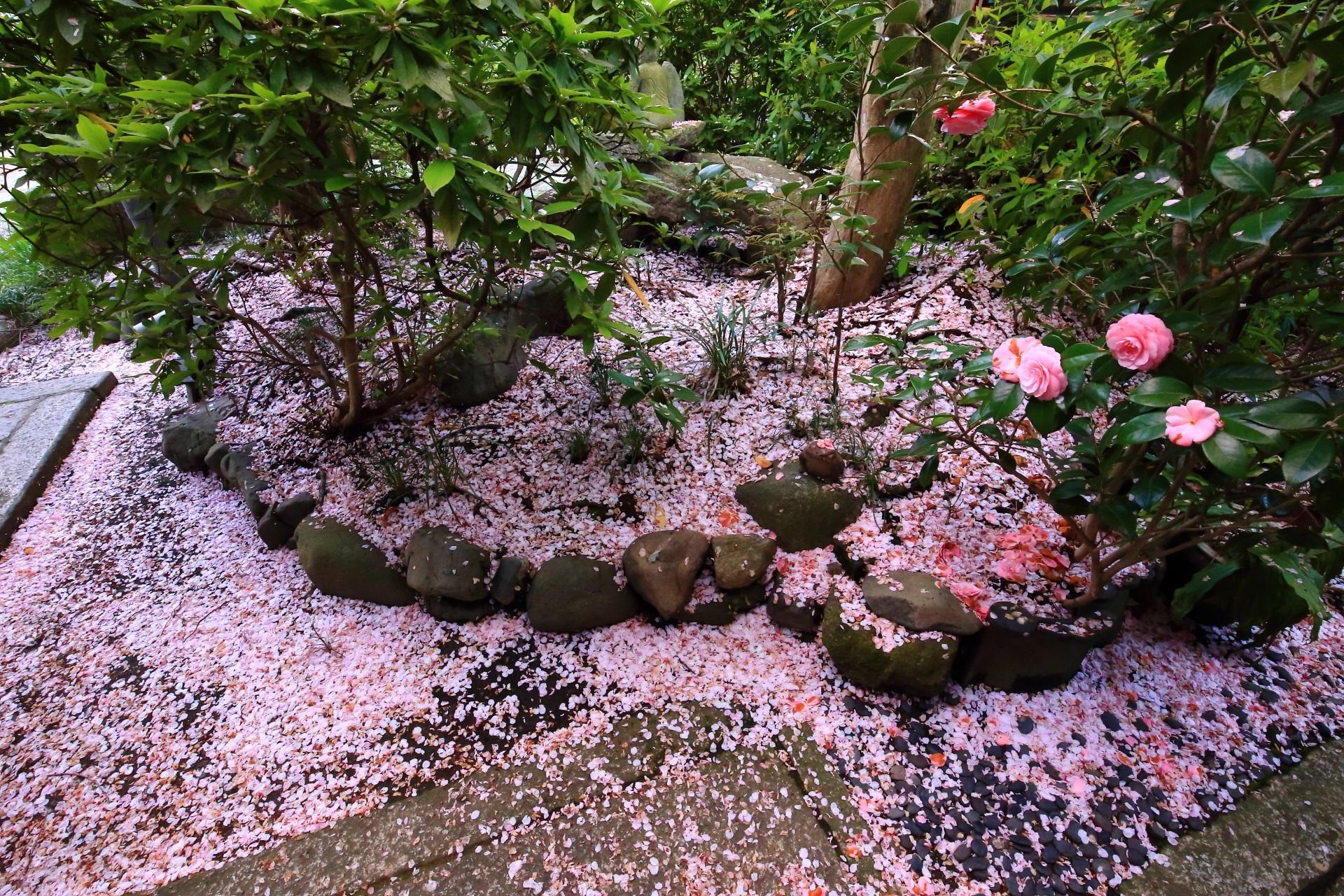 見事なピンクの散り桜