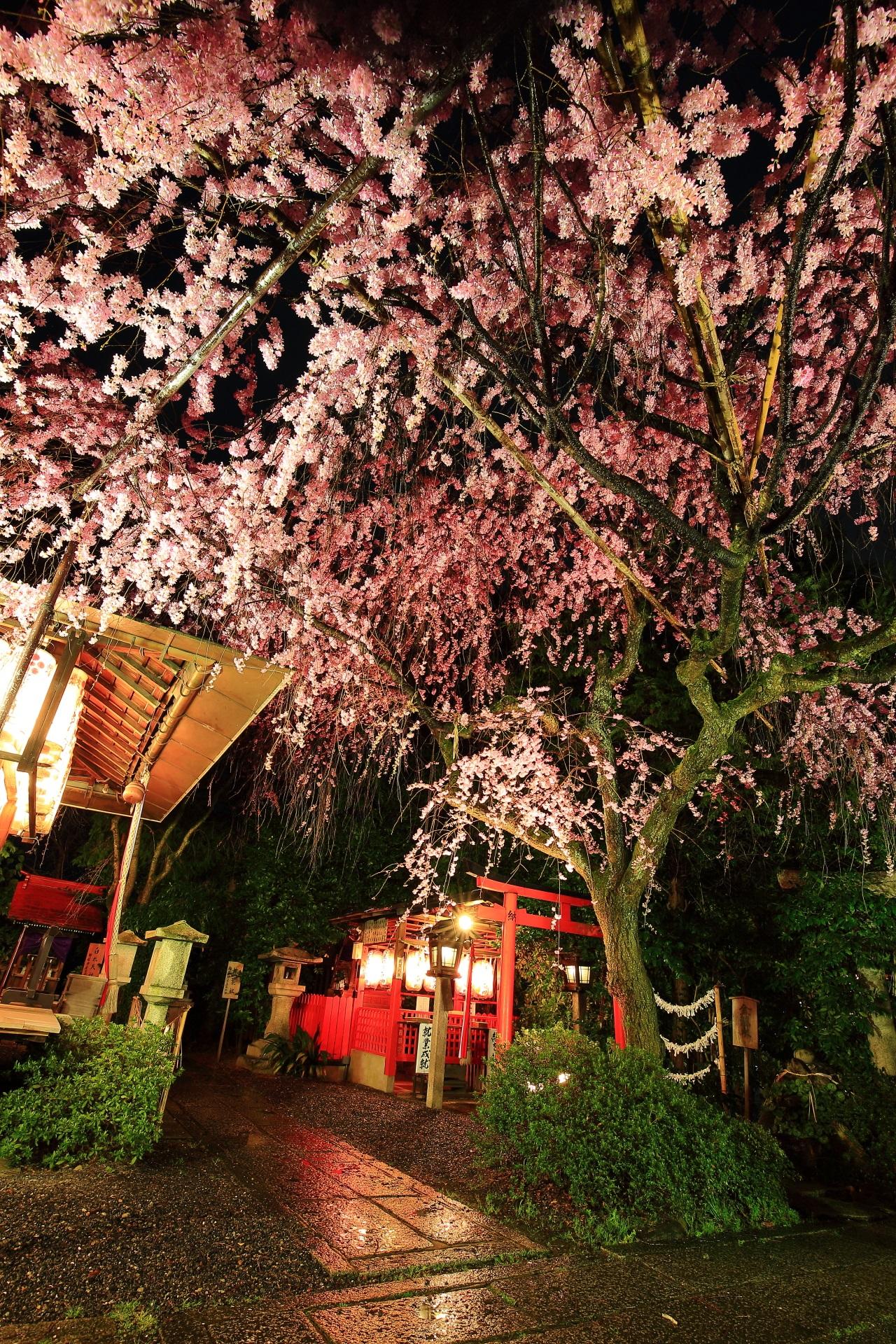 水火天満宮の素晴らしい夜桜ライトアップ