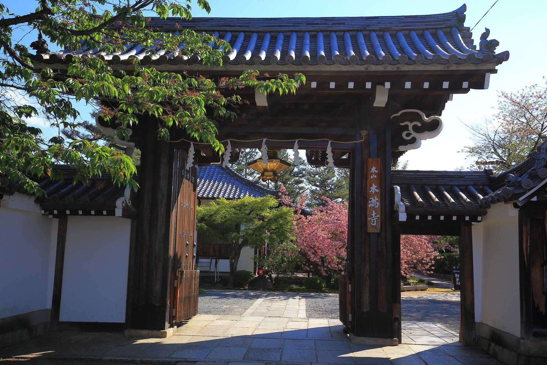 本満寺の山門と奥に見える八重桜