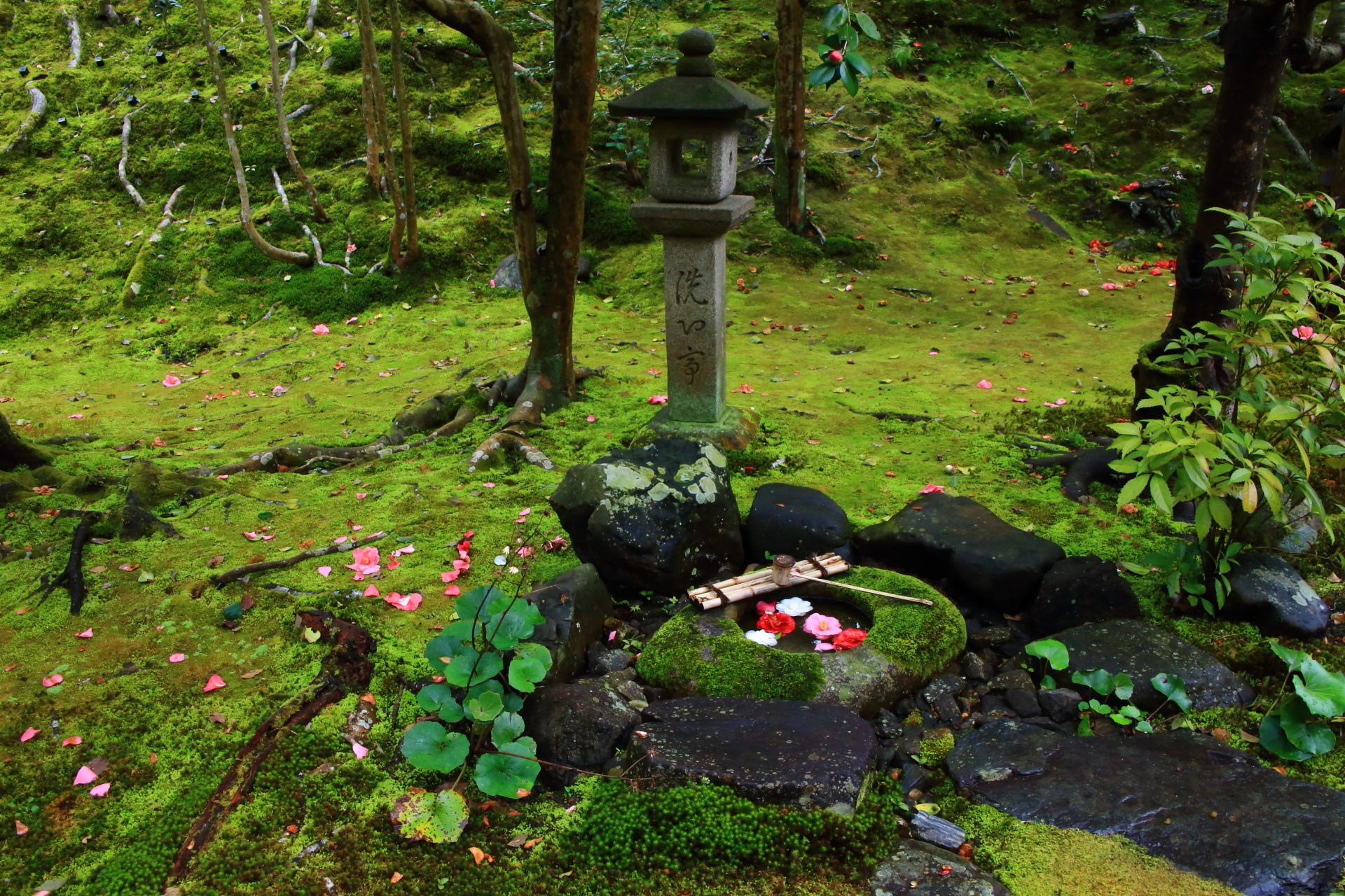 苔の庭園にある風情ある蹲(つくばい)