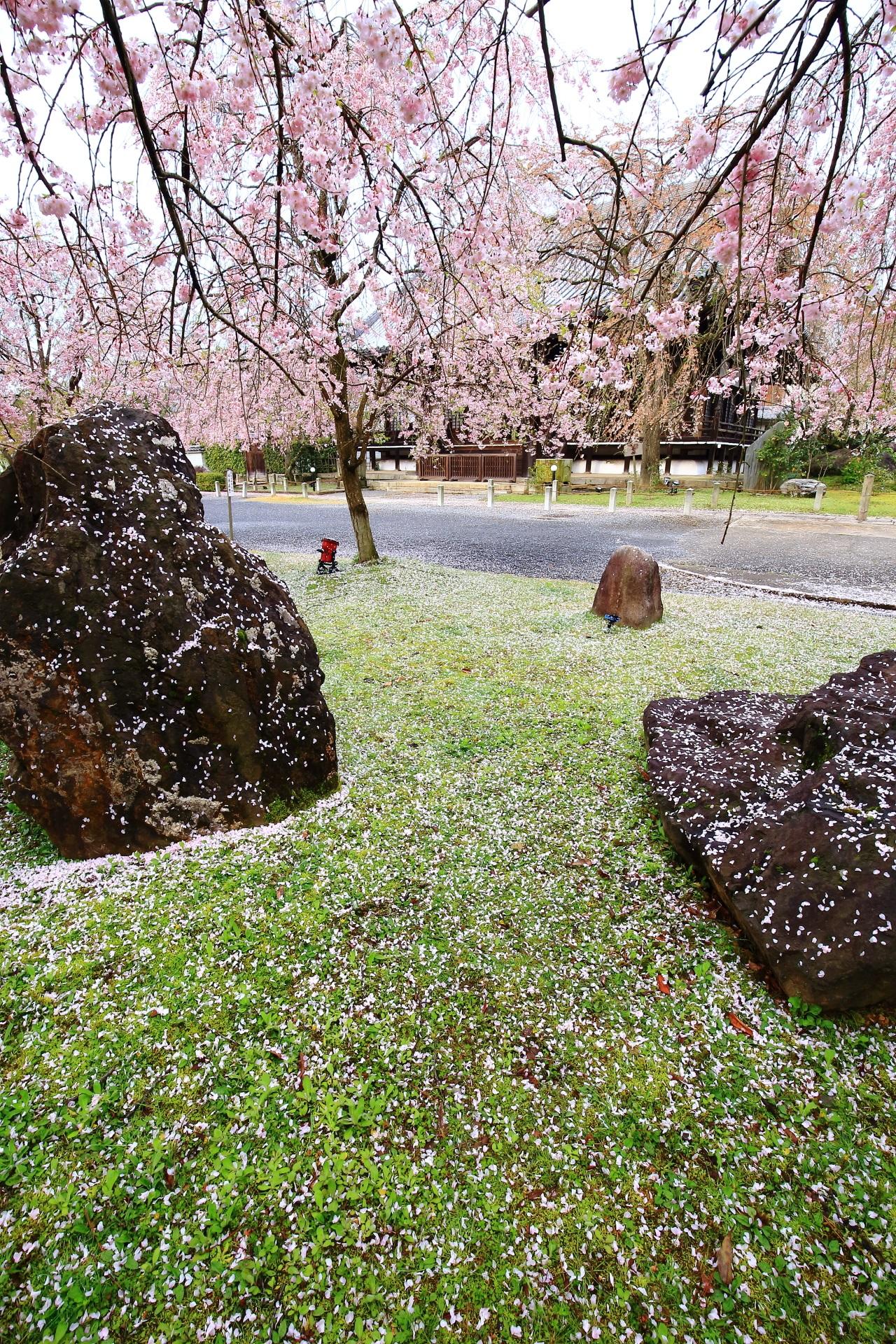 散り桜の華やかで幻想的な情景