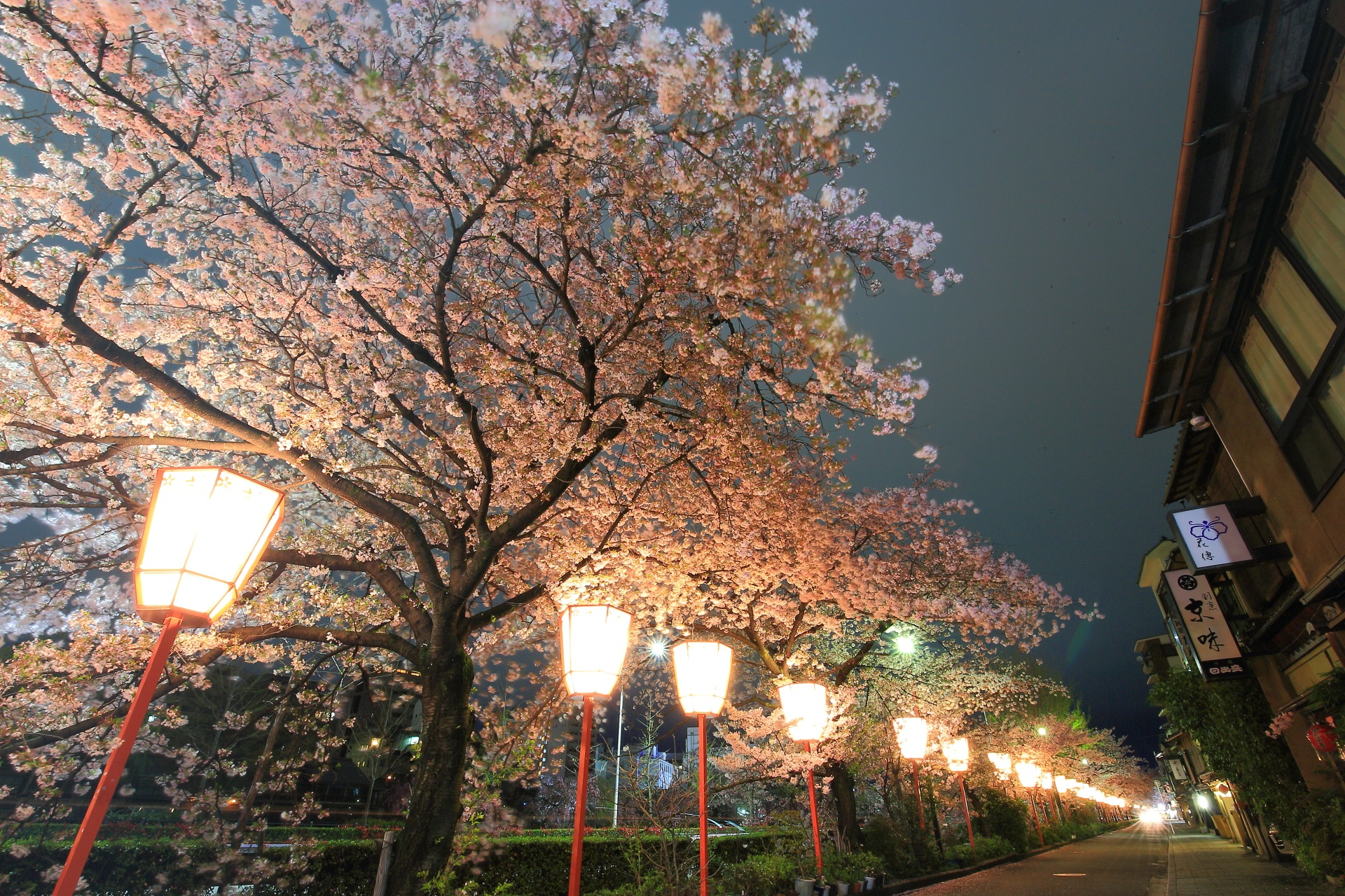 宮川町の素晴らしい夜桜の情景と風情ある街並み