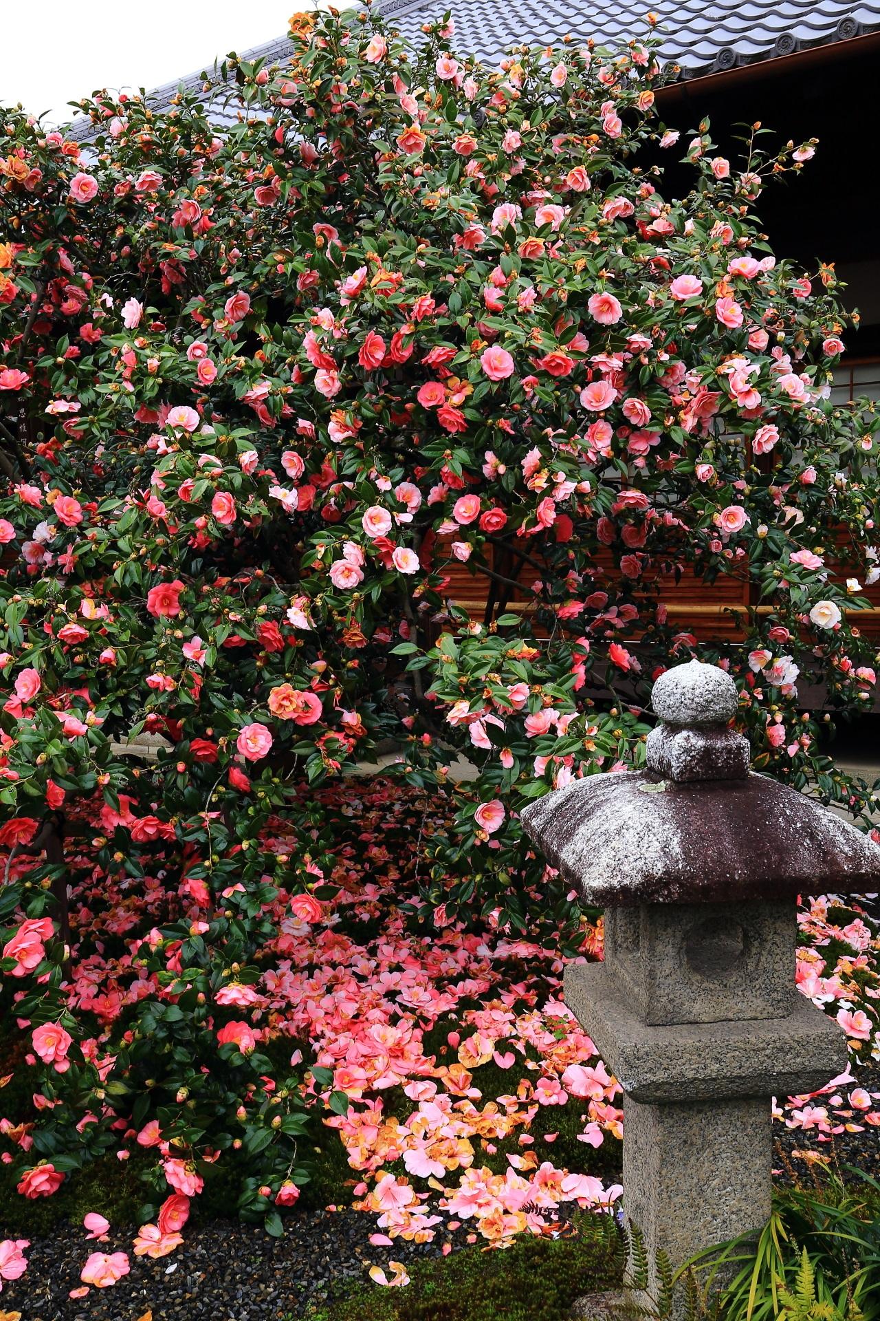 自分一人だけの時間も長い京都の椿の隠れた名所の地蔵院