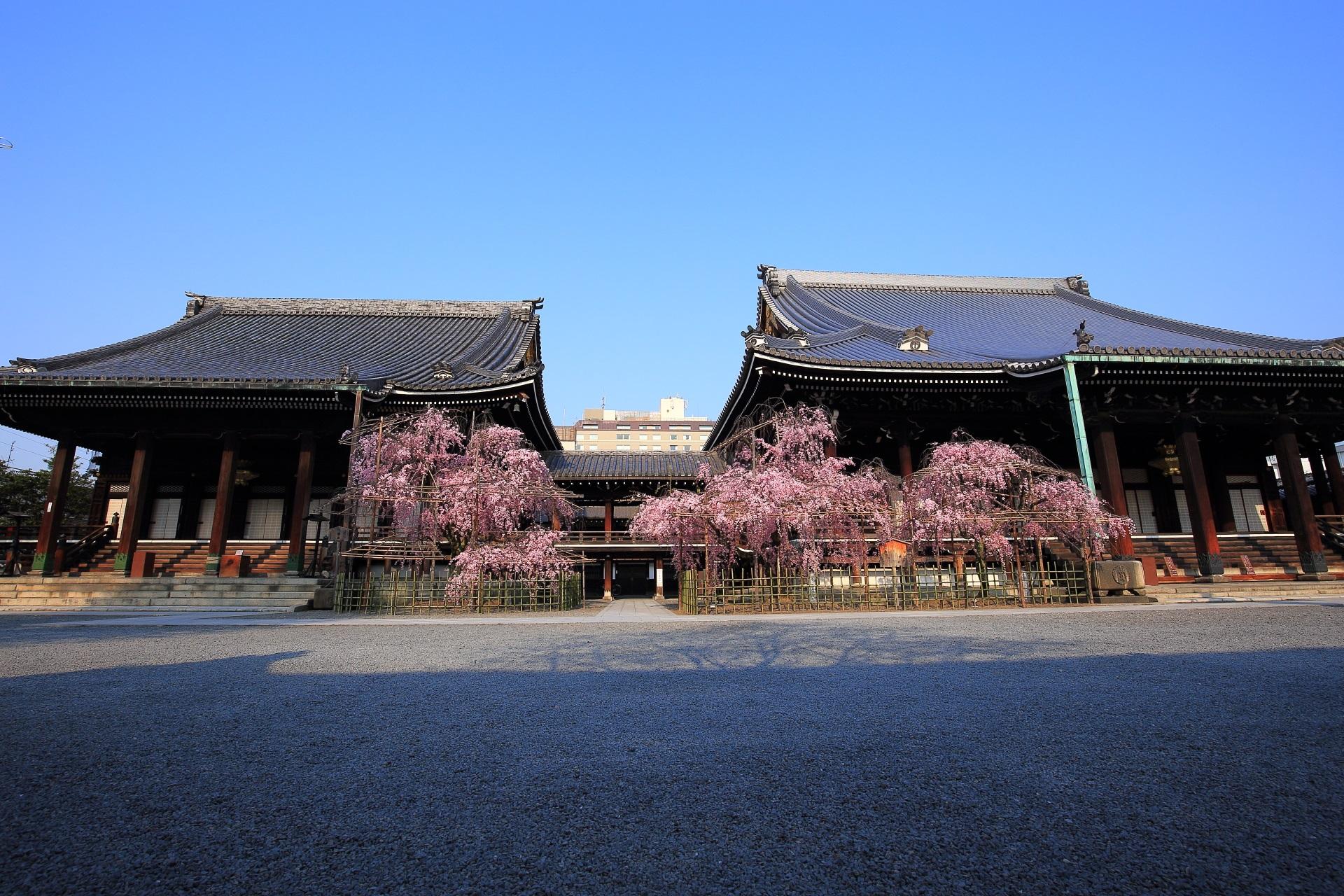 高画質 写真 仏光寺 桜