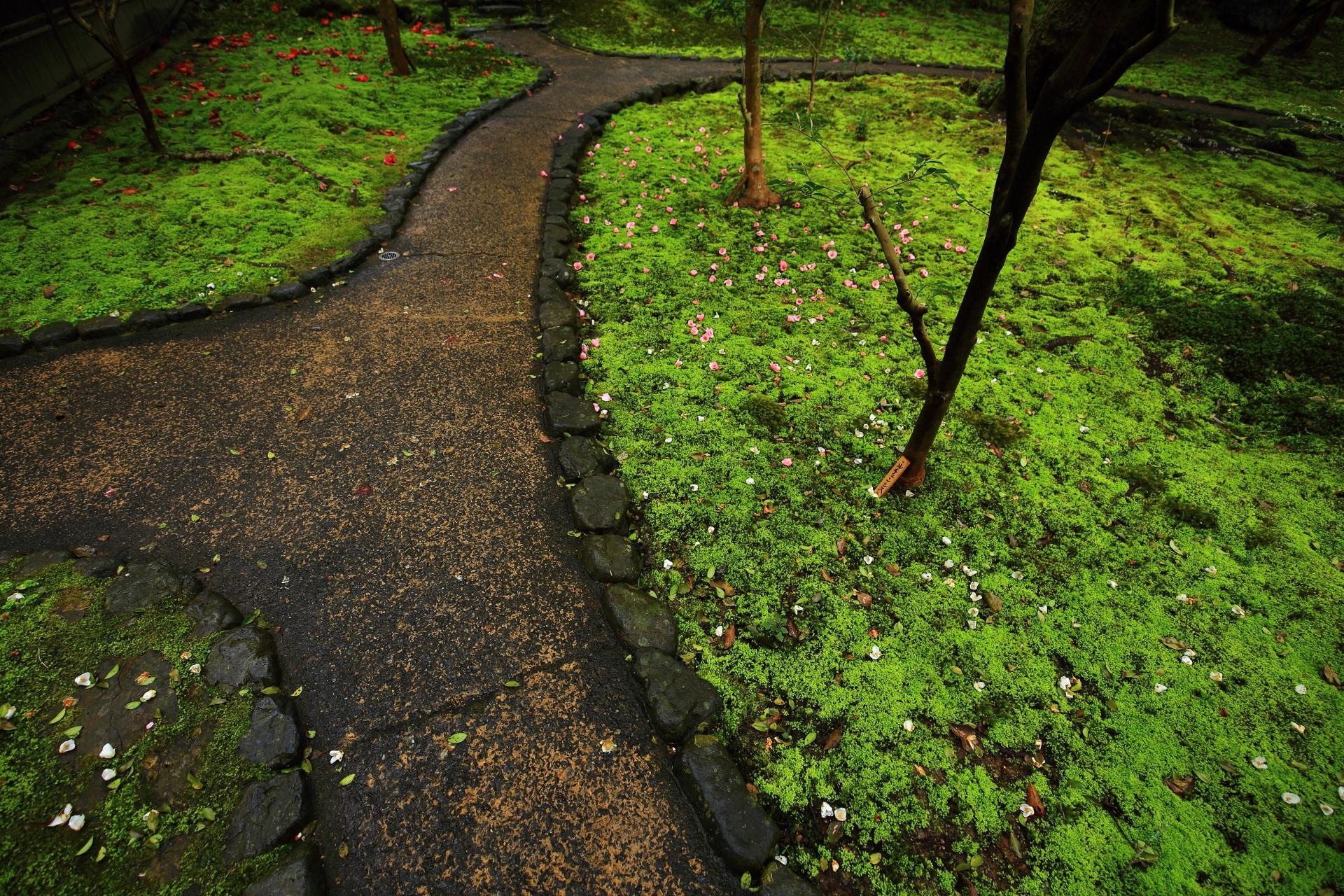 参道の周りに広がる華やかな椿が散った淡い苔