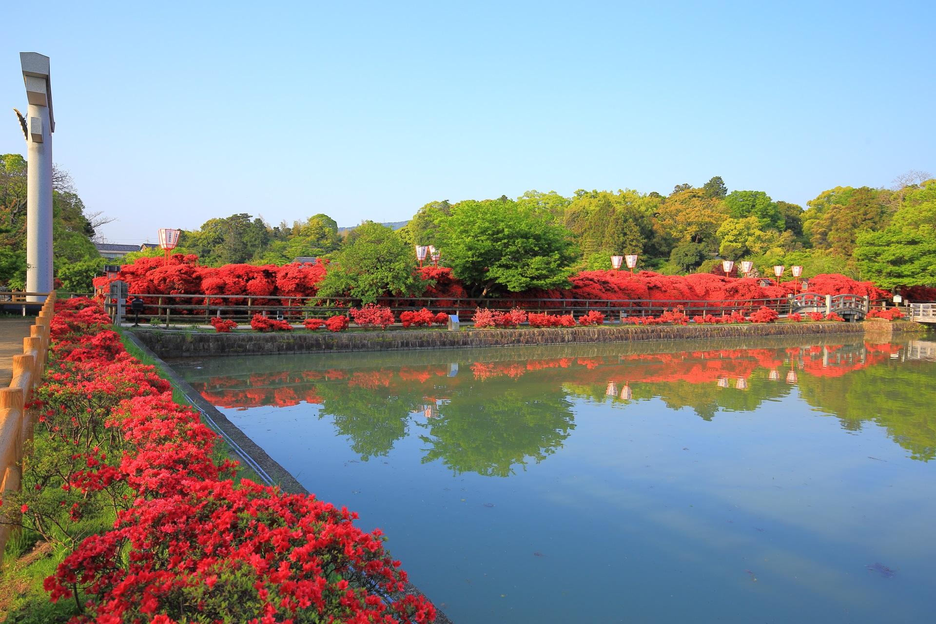 水辺を真っ赤なキリシマツツジが彩る八条が池の北側
