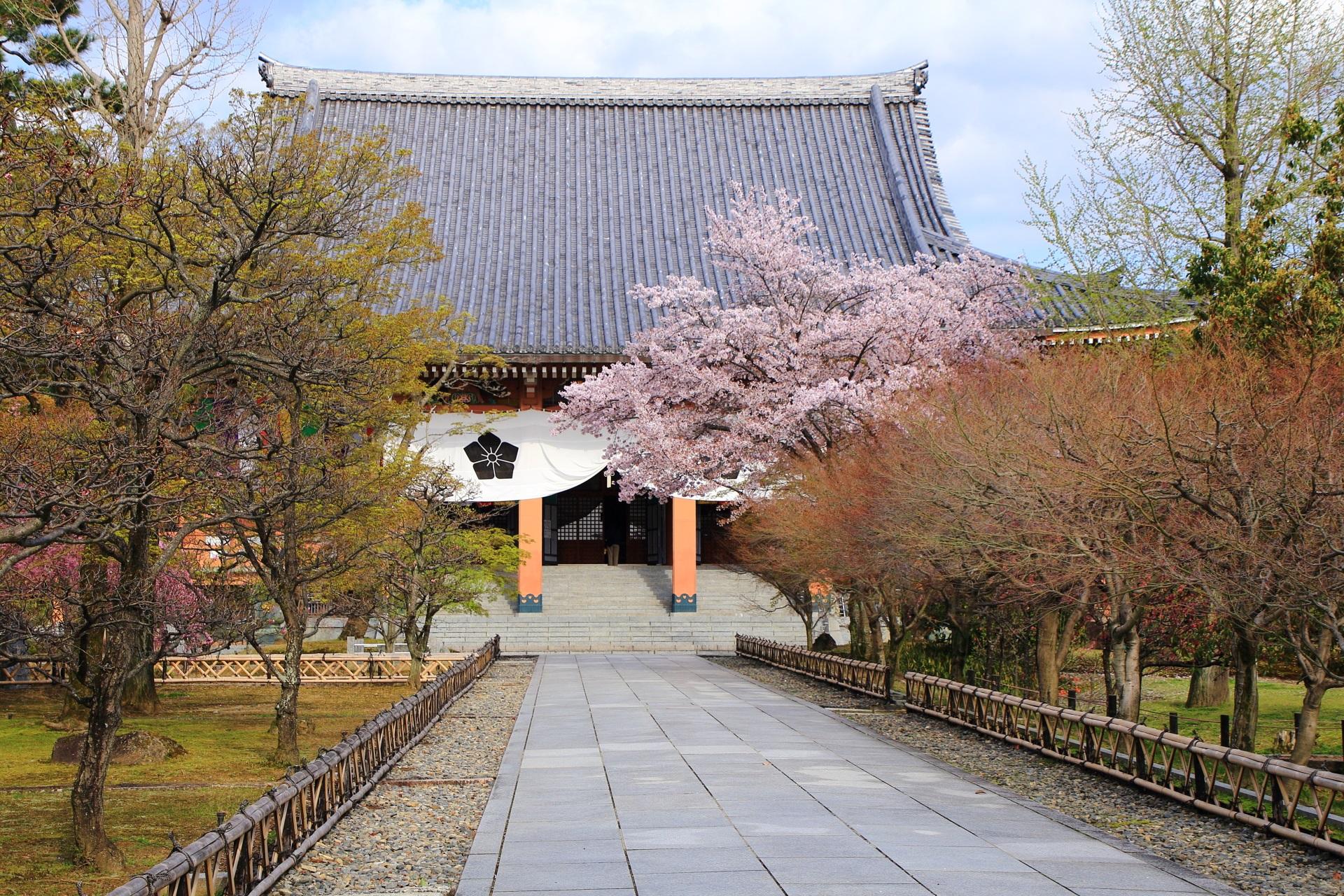 智積院の金堂と静かに佇む桜