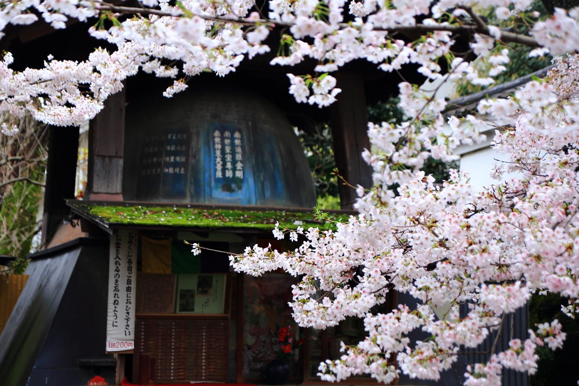 長建寺の鐘と桜