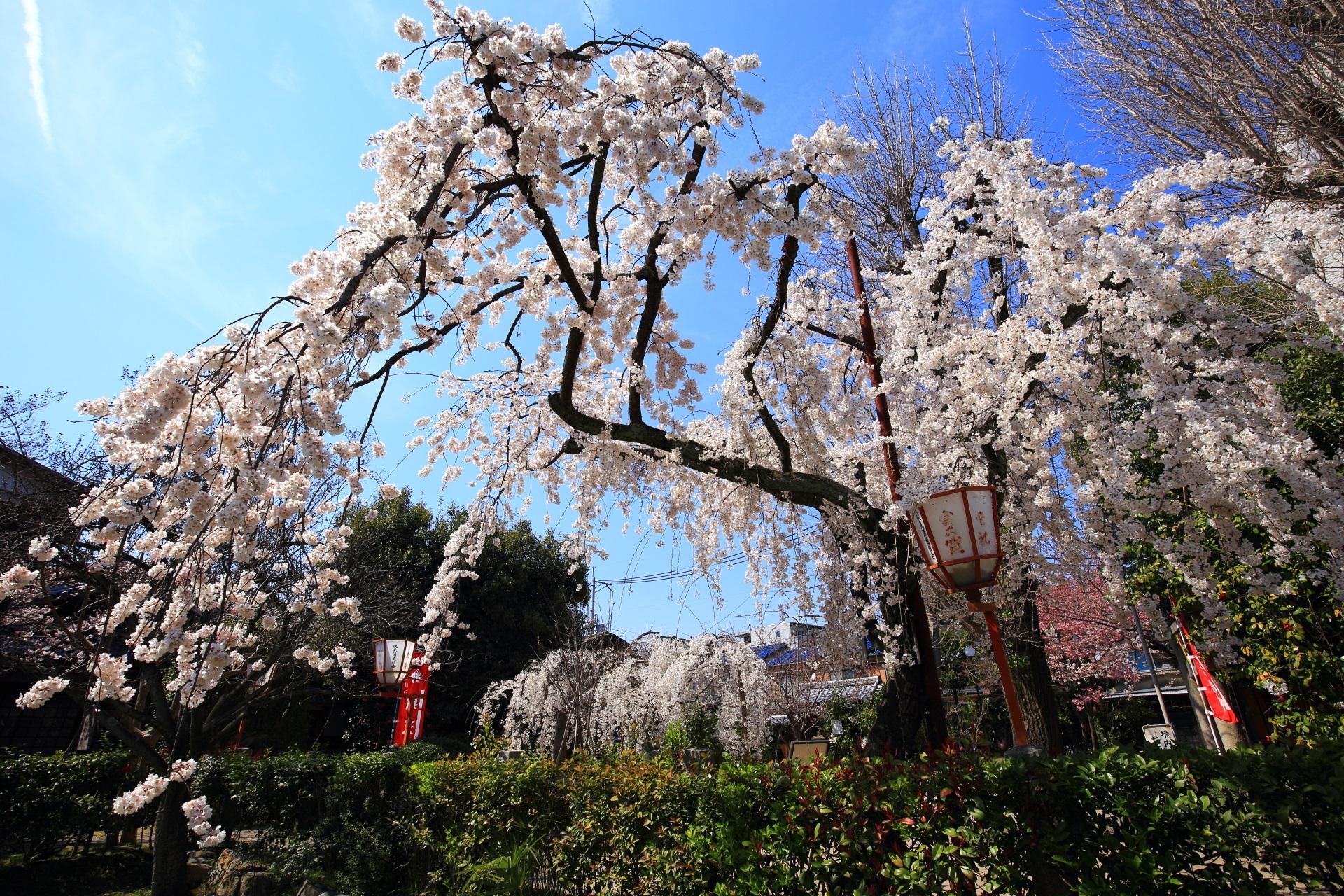 大きく翼を広げて今にも飛び立ちそうな桜