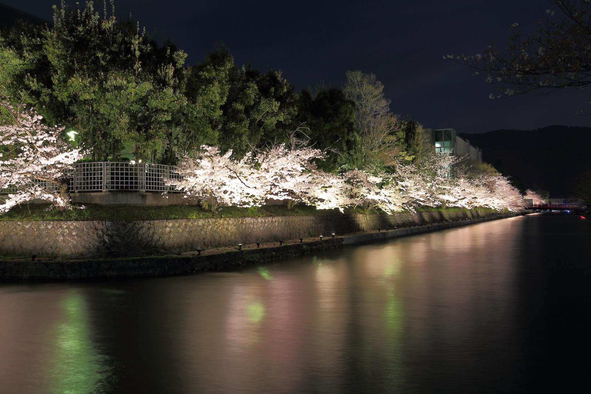 東西に流れ平安神宮前へと続く疏水の桜