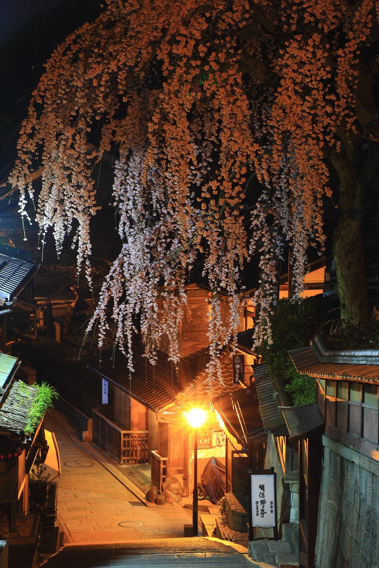 昔の時代にタイムスリップしたかのような雰囲気の夜桜