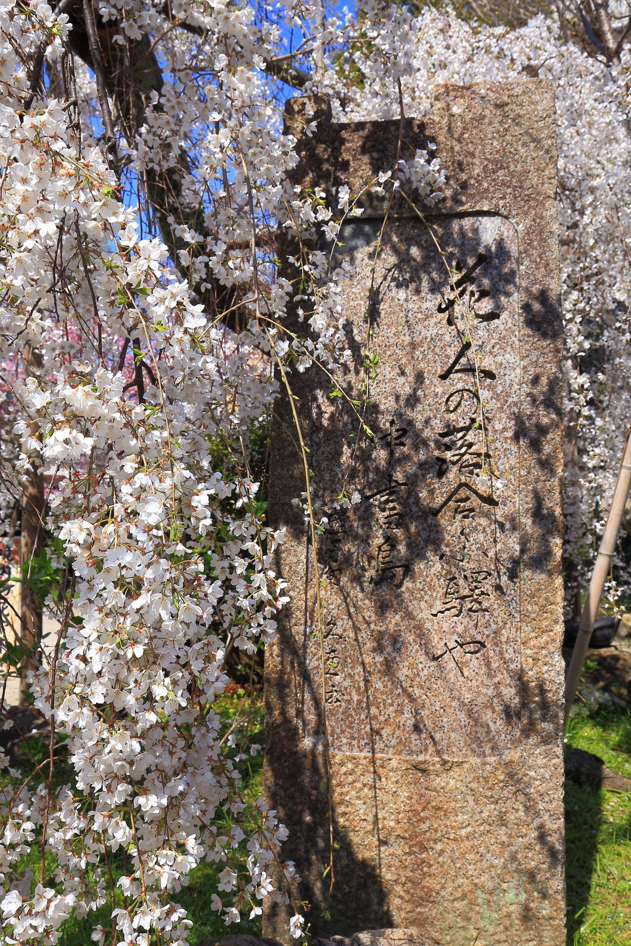 長建寺のしだれ桜と歌碑