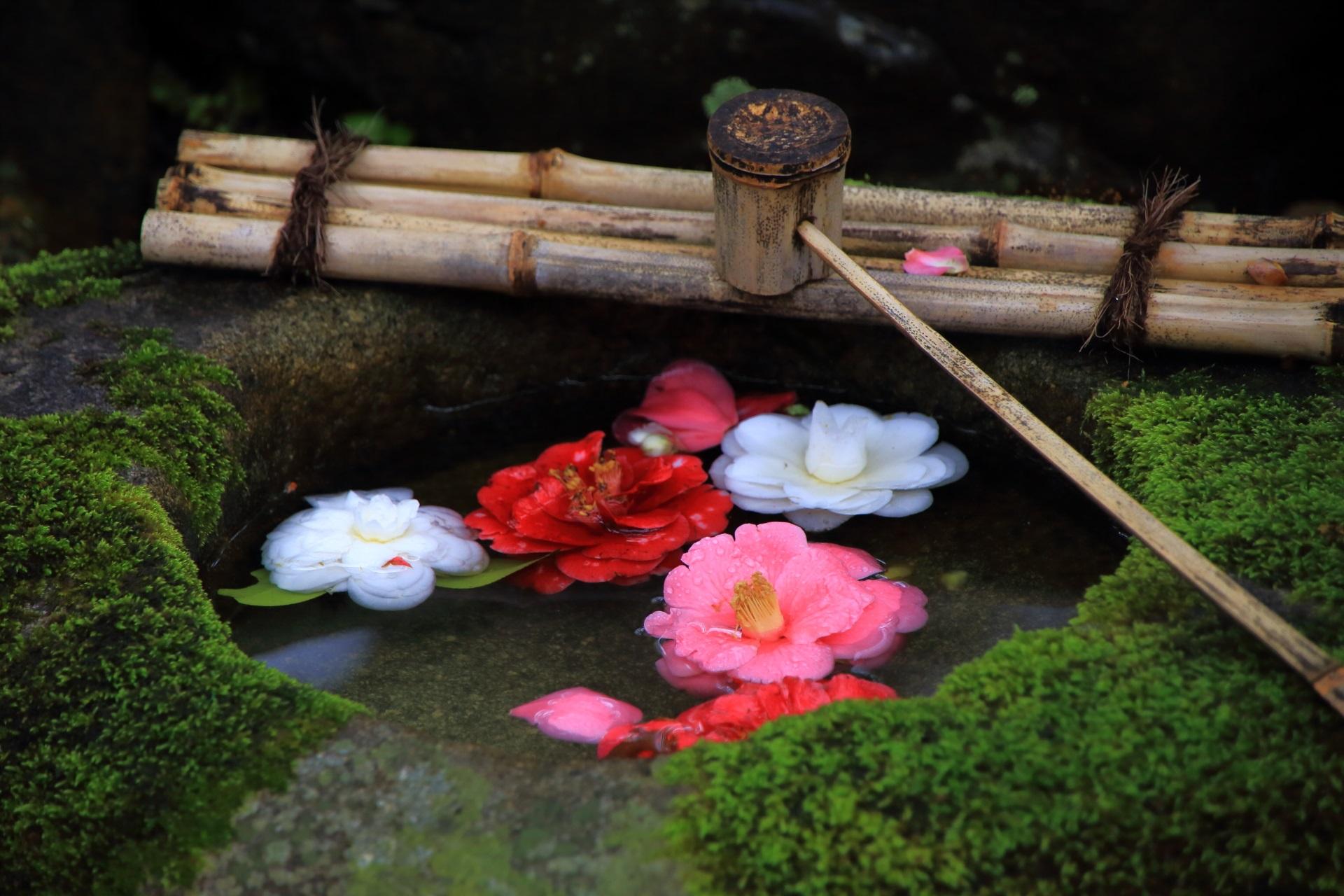 庭園を彩る鮮やかな椿の演出